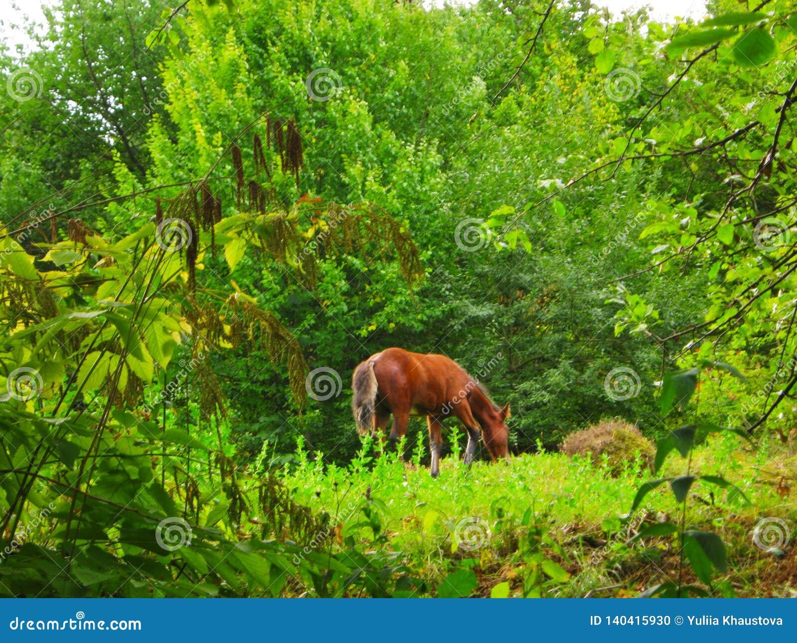 Le jeune cheval frôle dans la forêt en été