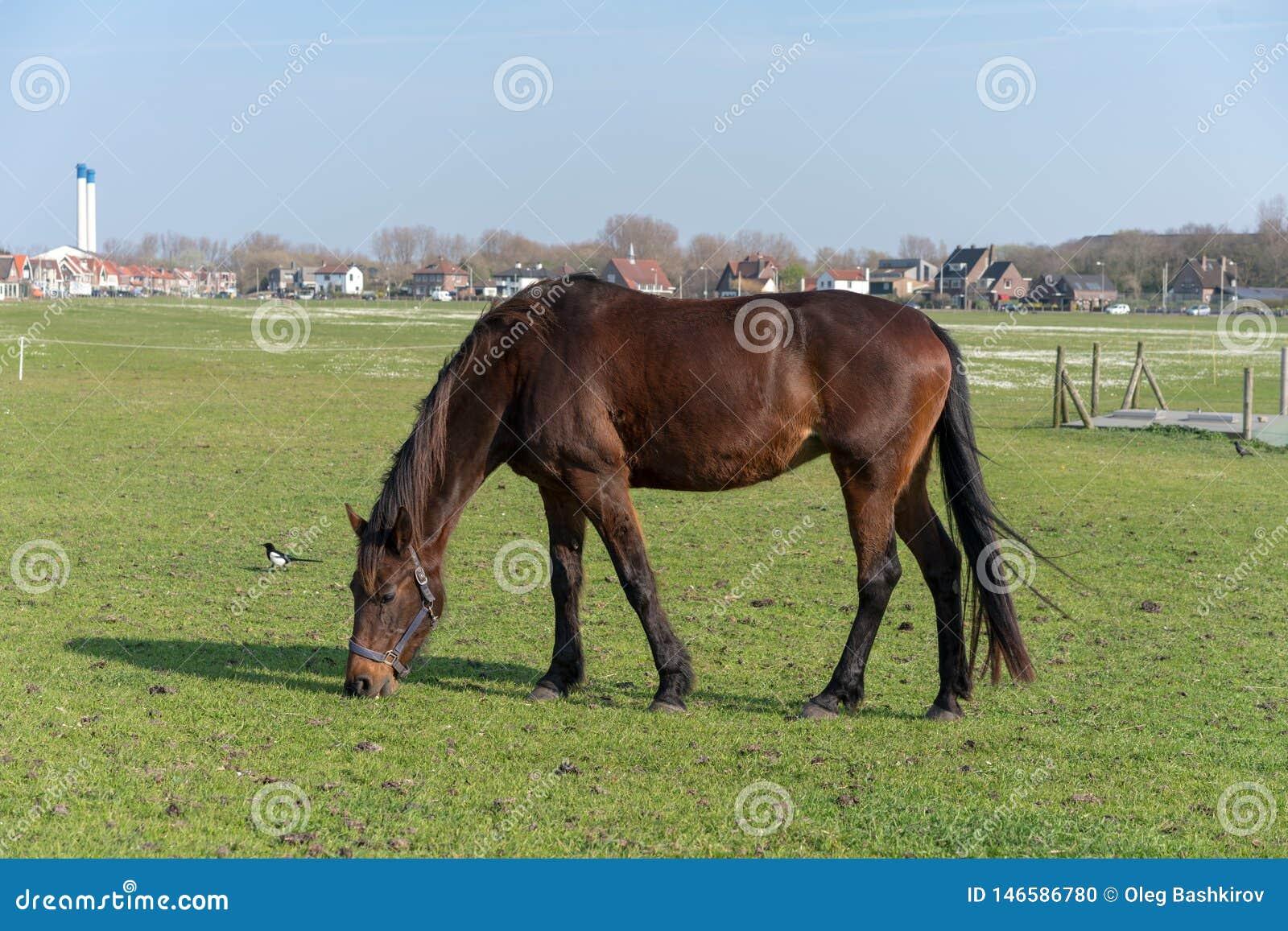 Le jeune cheval qui est frôlé sur un pré d été