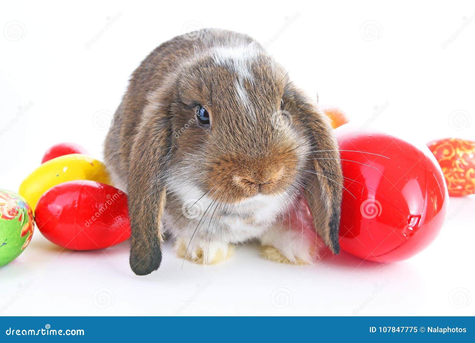 Le lapin de Pâques taillent avec des oeufs sur le fond blanc d isolement