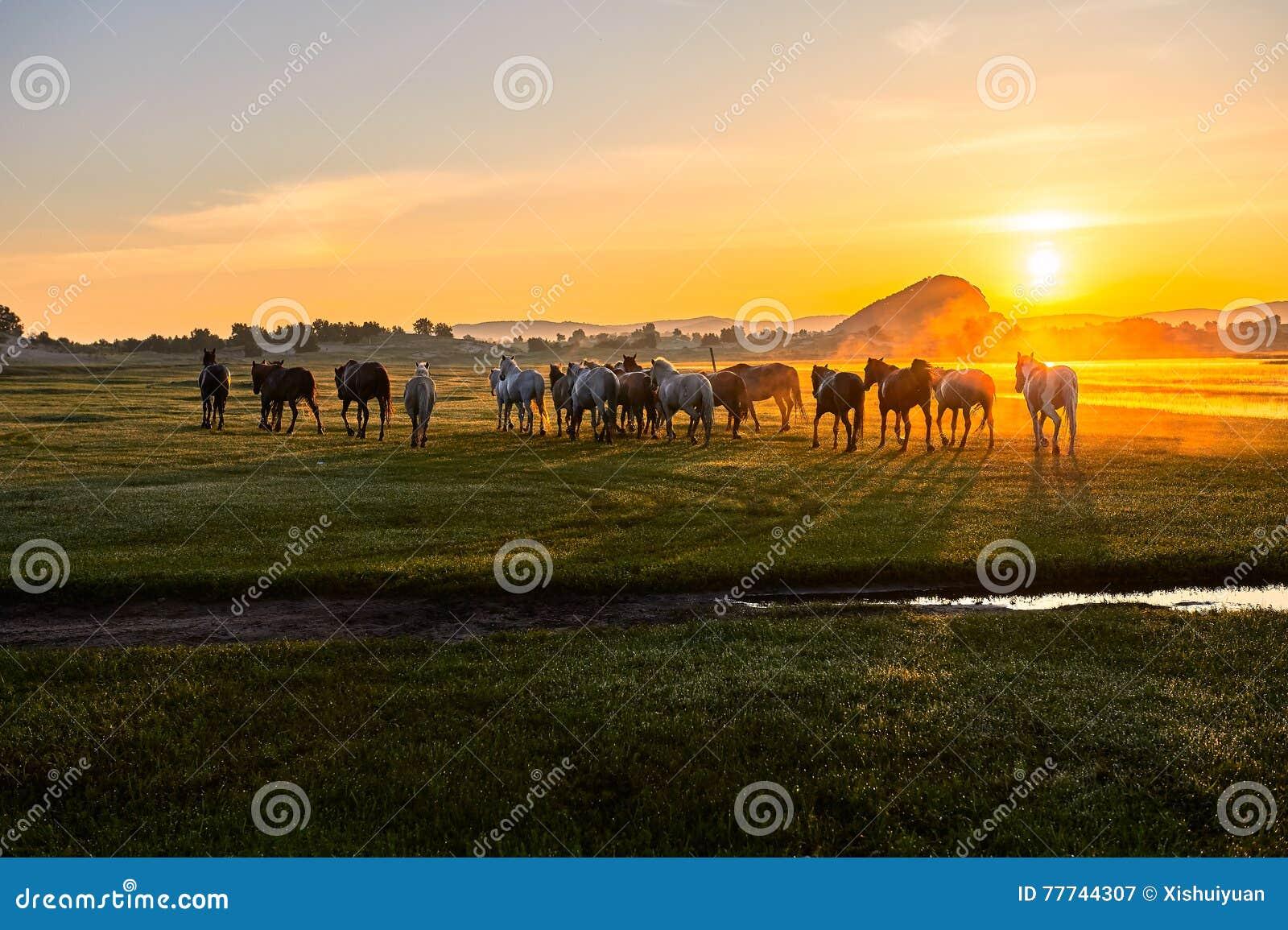 Le lever de soleil de manada