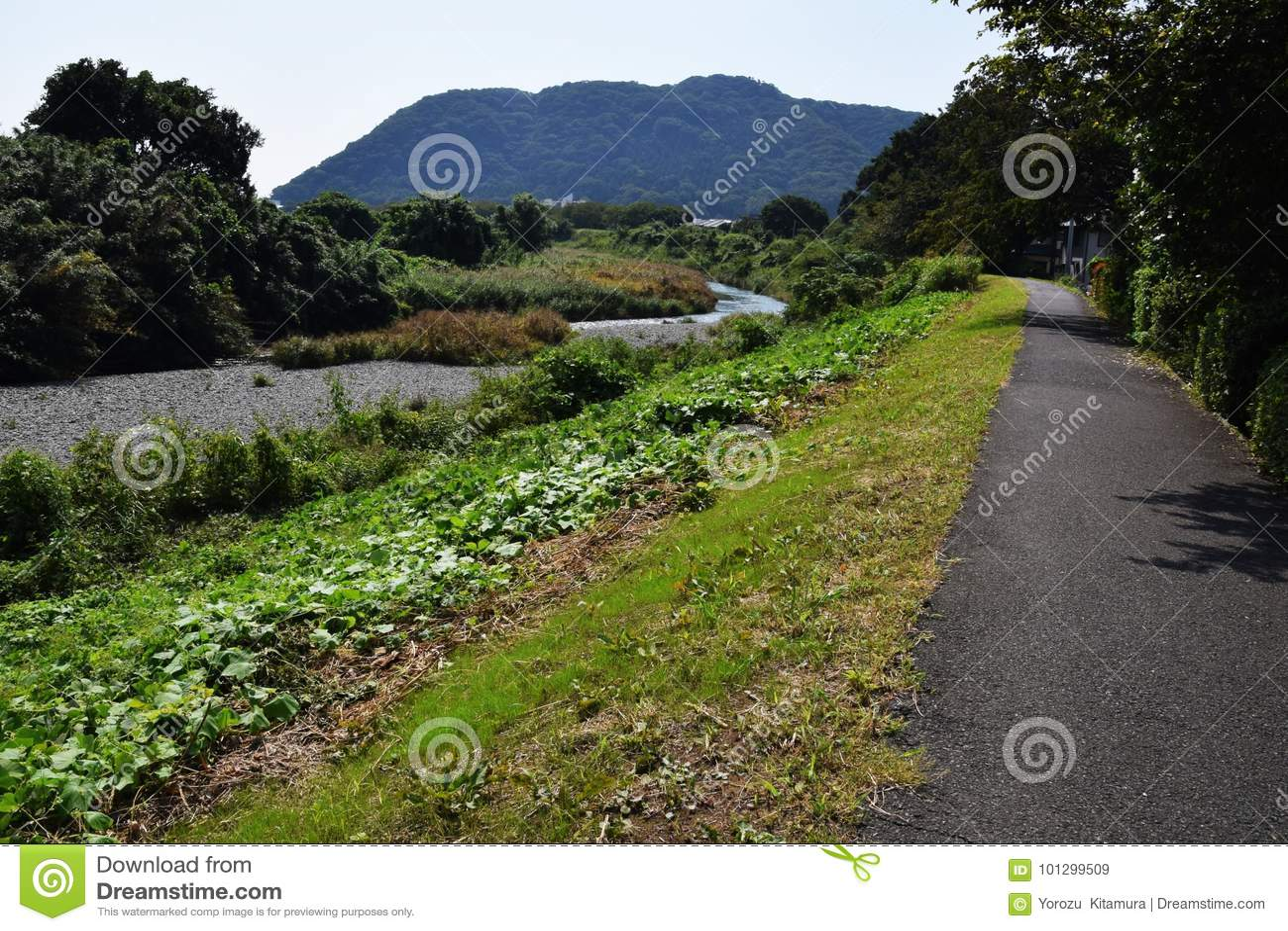 Le long du fleuve de chemin