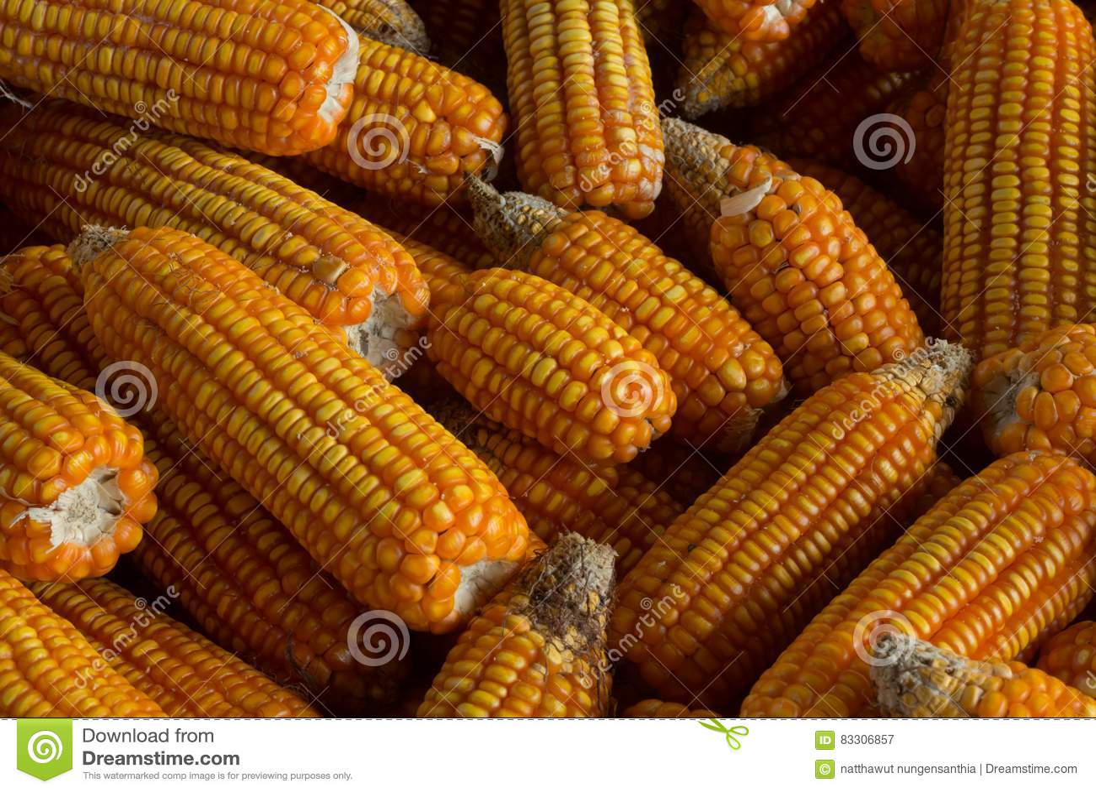 Le maïs étendu a rayé la terre