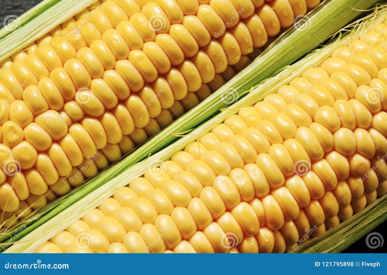 Le maïs organique juteux frais, se ferment, foyer sélectif
