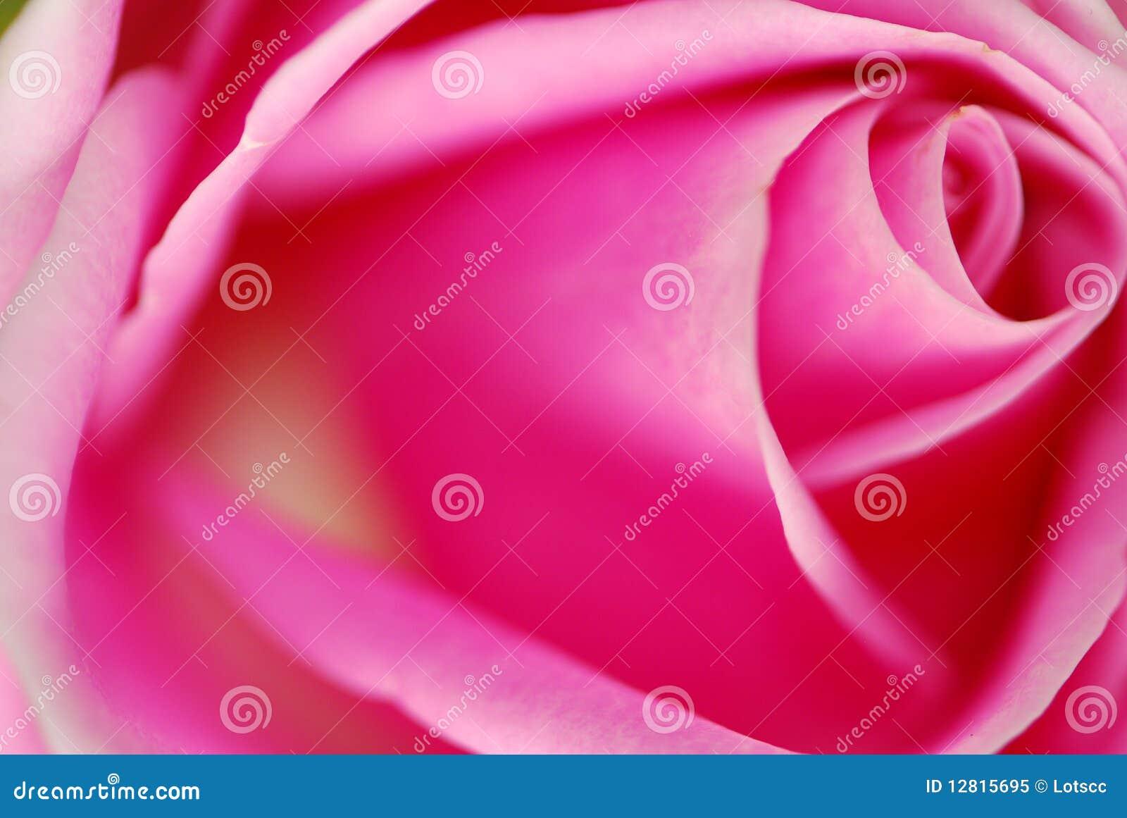 Le macro rose a monté