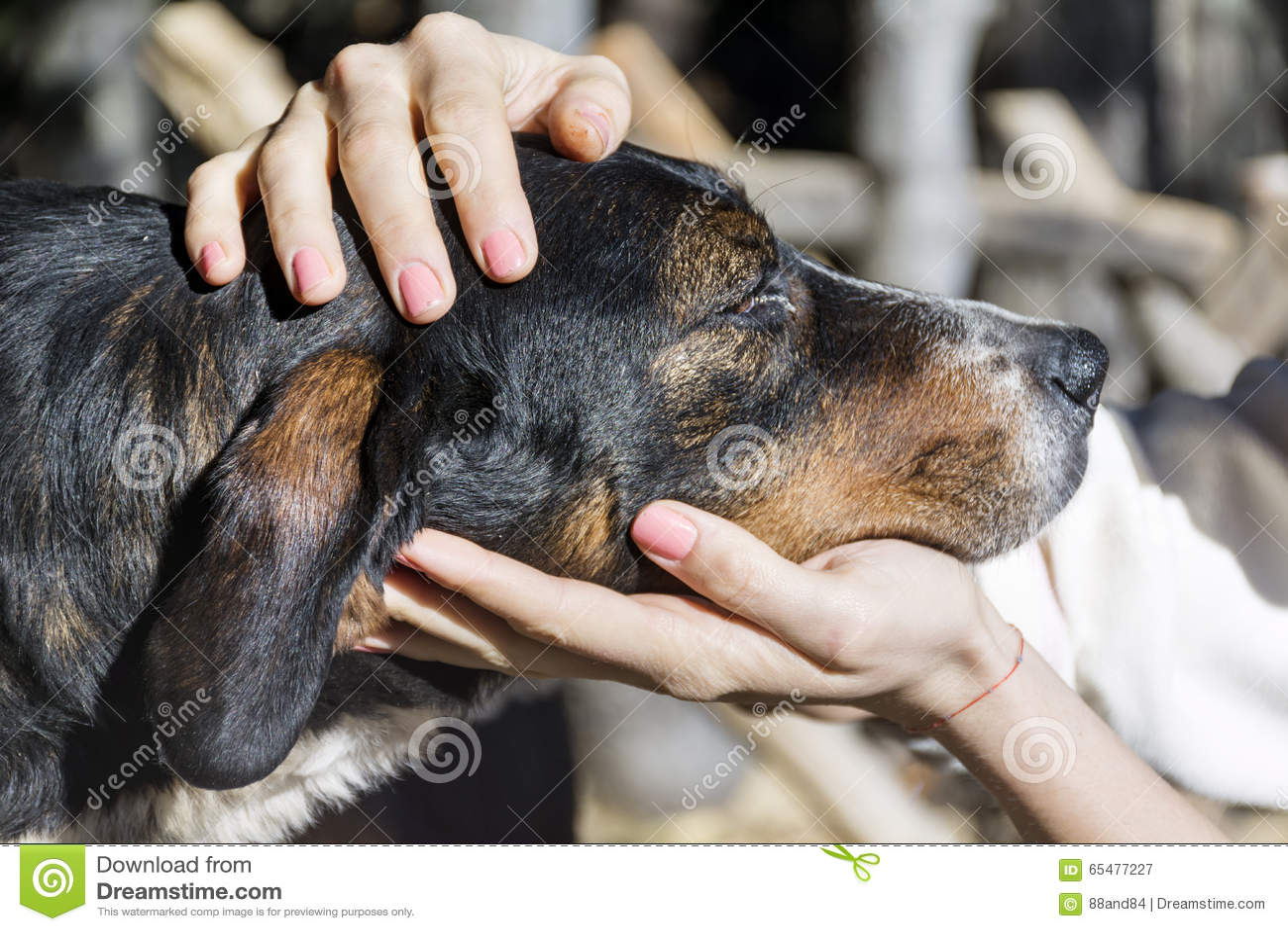 Le mani della donna accarezzano un cane senza tetto