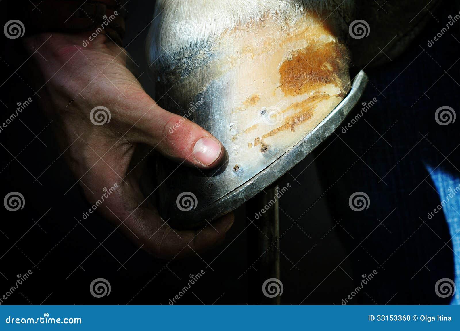 Le maréchal-ferrant tient un sabot de jambe de cheval