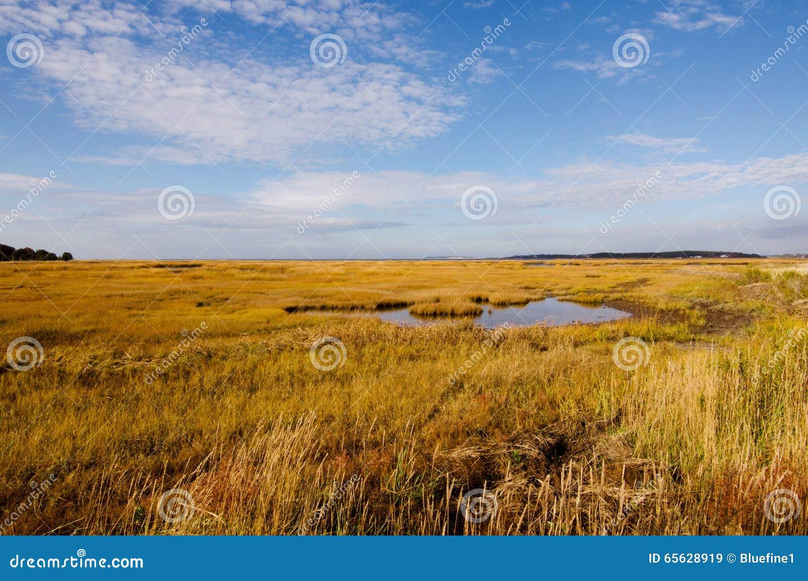 Le marais dans l automne