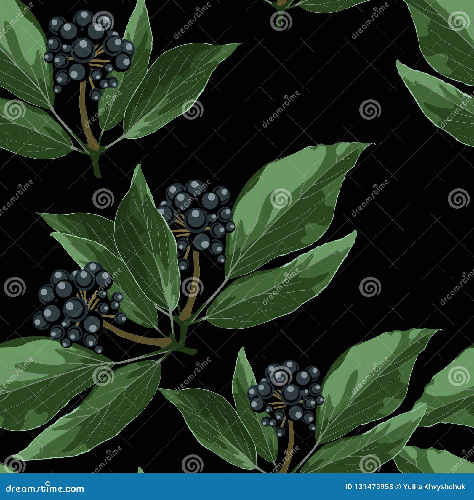 Le modèle sans couture de vecteur avec les baies bleues s embranchent avec des feuilles