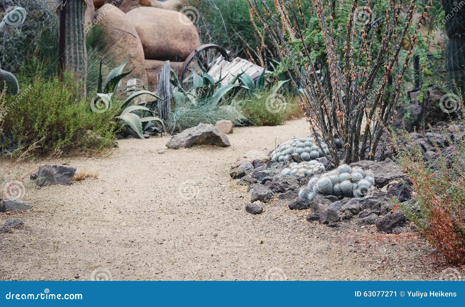 Download Le monde du cactus image stock. Image du rond, traînée - 63077271