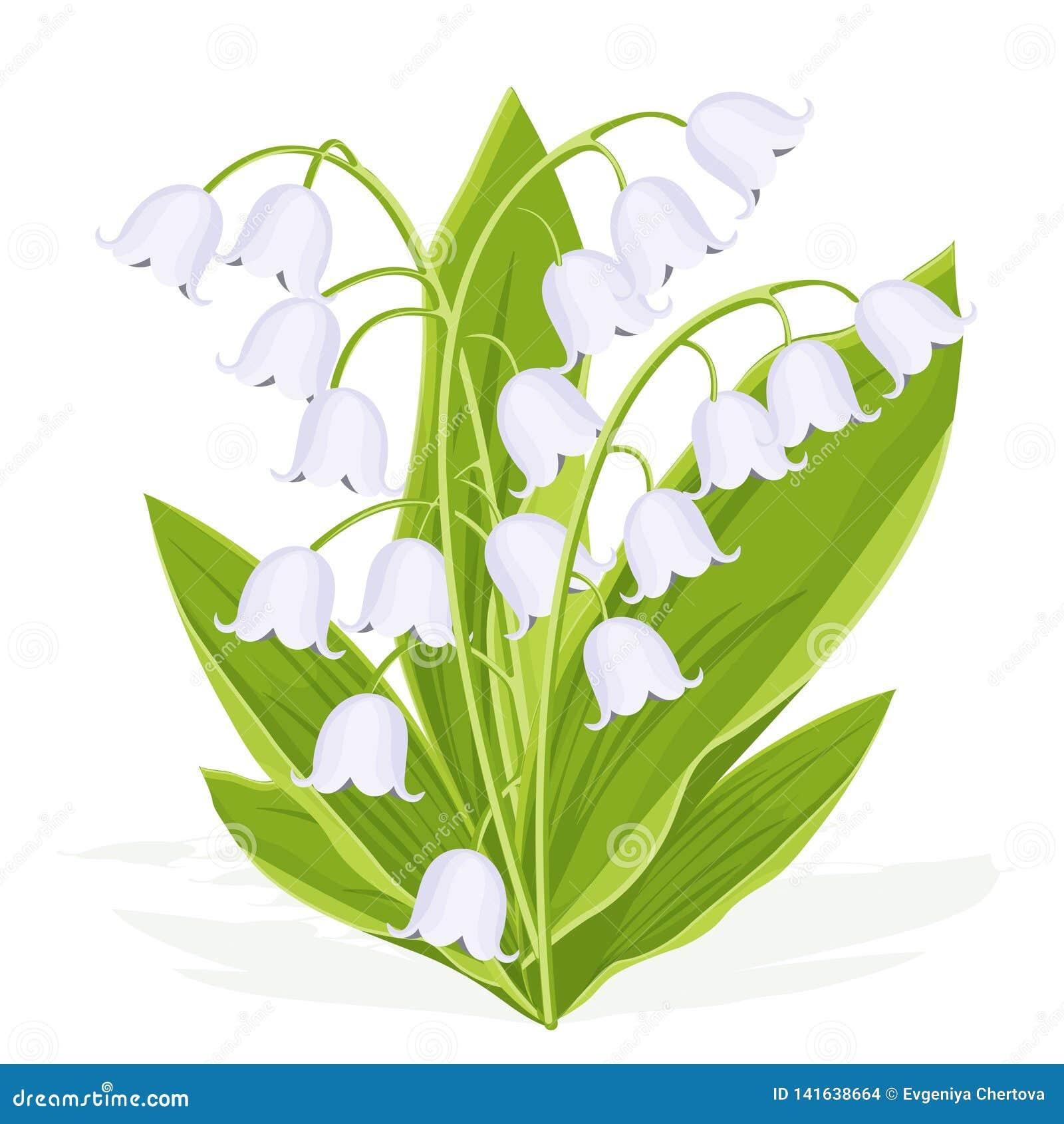 Le Muguet Bouquet De Ressort De Fleur Sensible Illustration De
