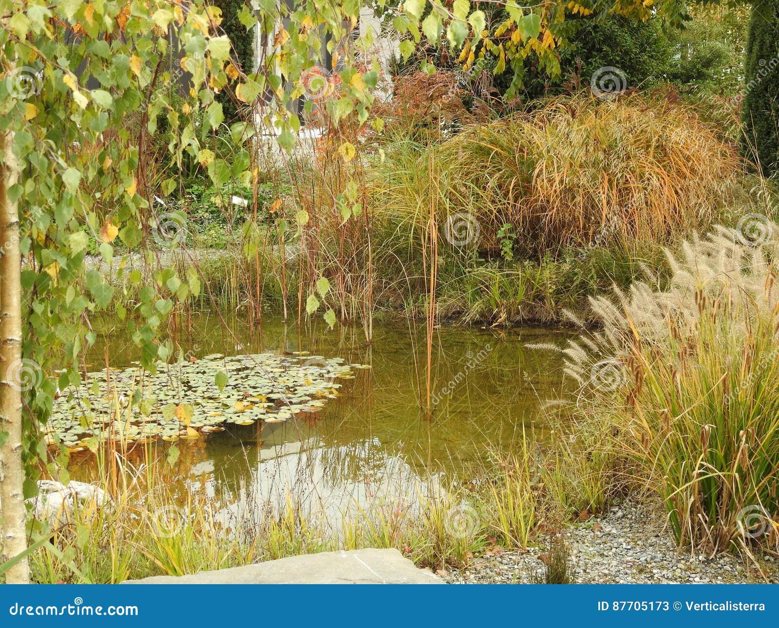 Le nénuphar est reflété dans l eau