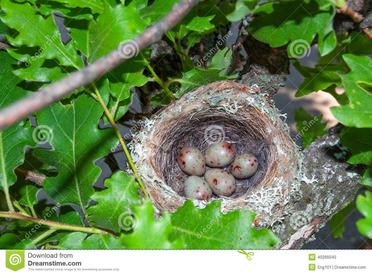Engineering Design Process also Stock Photo Cockatiel Turning Eggs Nest Box Female Its Inside Its Image54219642 additionally Stock Photography Bird S Nest Hungry Chicks Spotted Flycatcher Muscicapa Striata Newly Hatched Begging Food Image37159022 additionally Stock Photo Nuthatch Feeding Nestlings Nest Eurasian Sitta Europaea Its Chicks Its Inside Tree Trunk Image50727284 further Stock Photography Mandatory Road Sign Stop Go Straight Photograph Image36988382. on eng101
