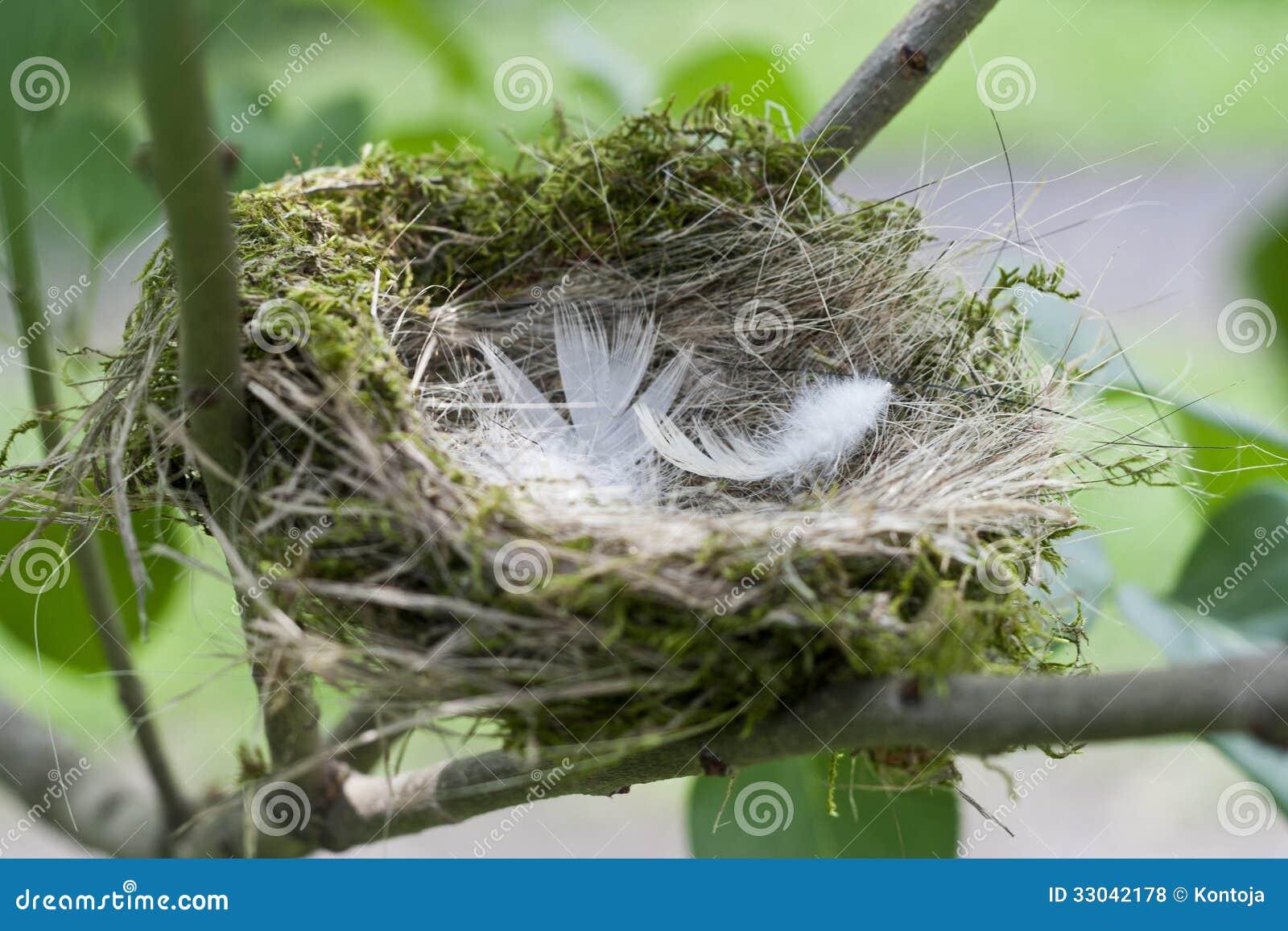 le nid de l 39 oiseau un synonyme pour une maison. Black Bedroom Furniture Sets. Home Design Ideas