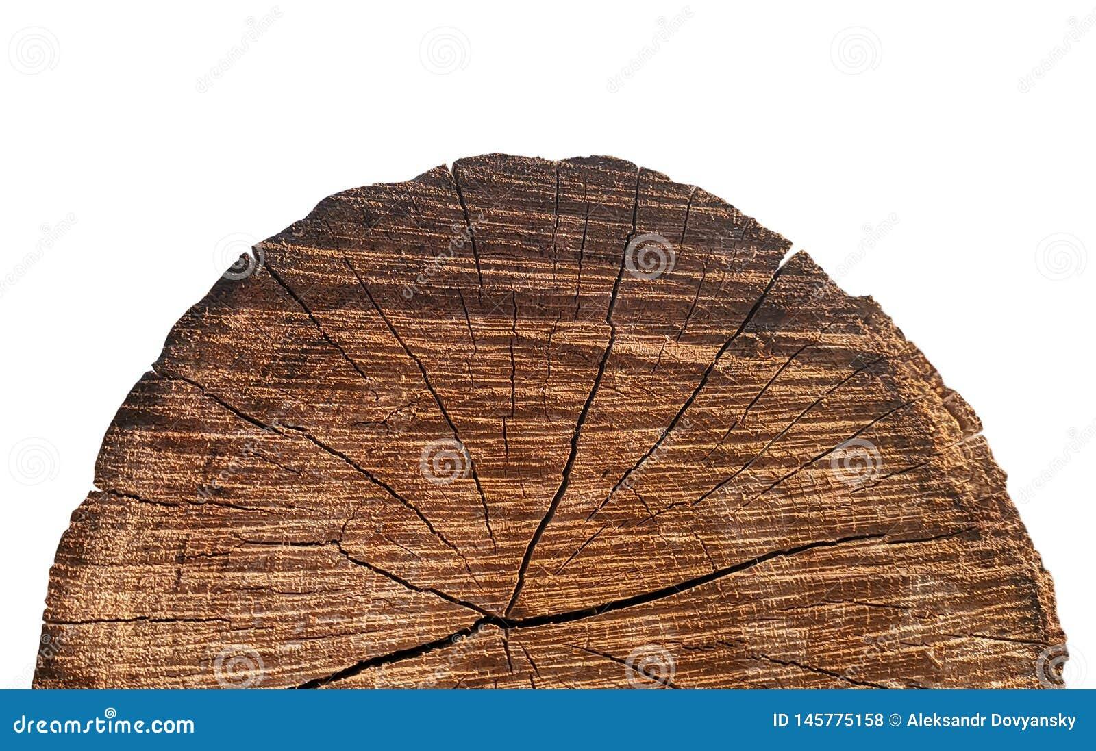 Le noyau du vieil arbre avec le plan rapproché de fissures