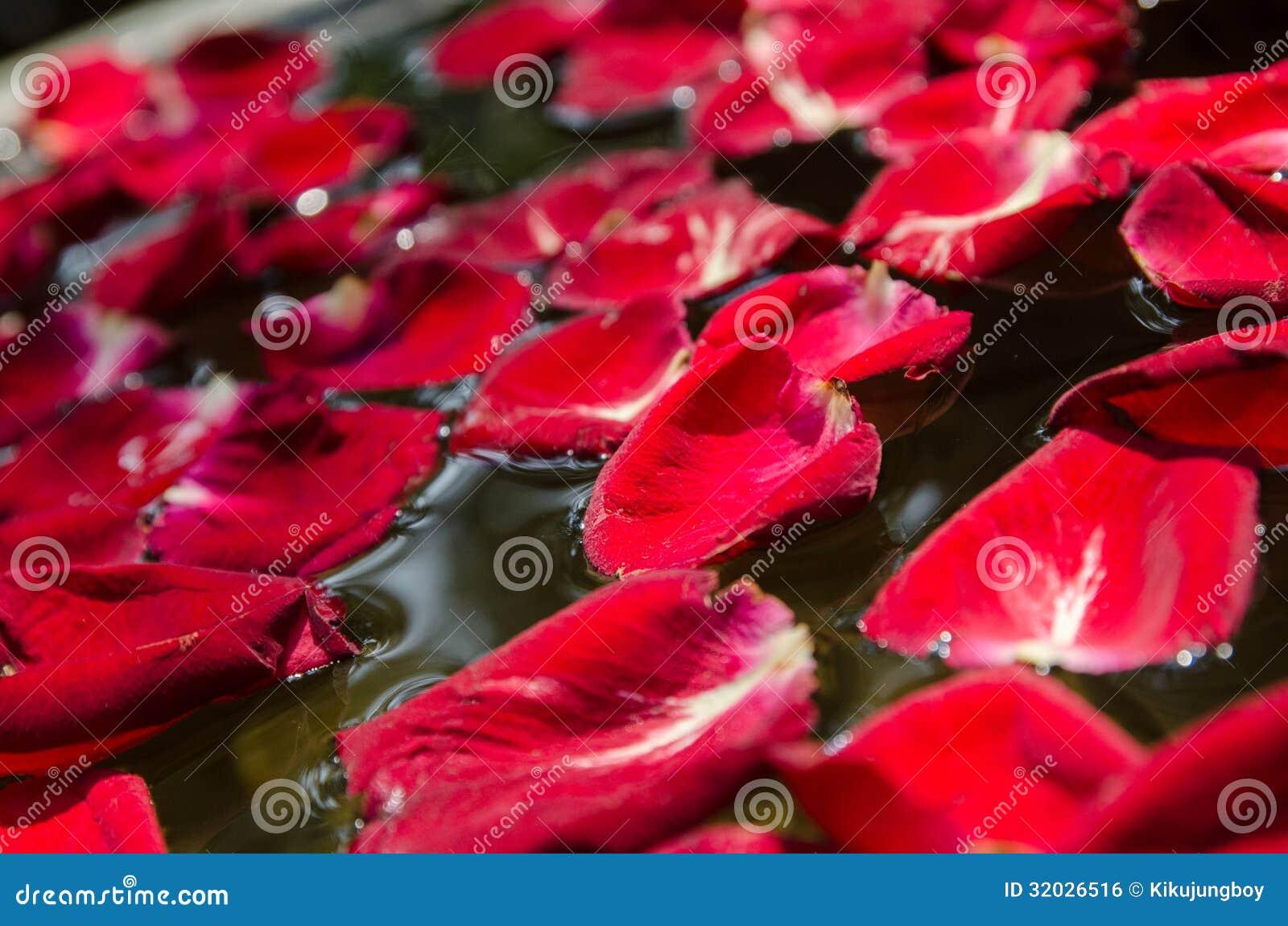 le p tale de rose rouge flotte sur l 39 eau image libre de droits image 32026516. Black Bedroom Furniture Sets. Home Design Ideas