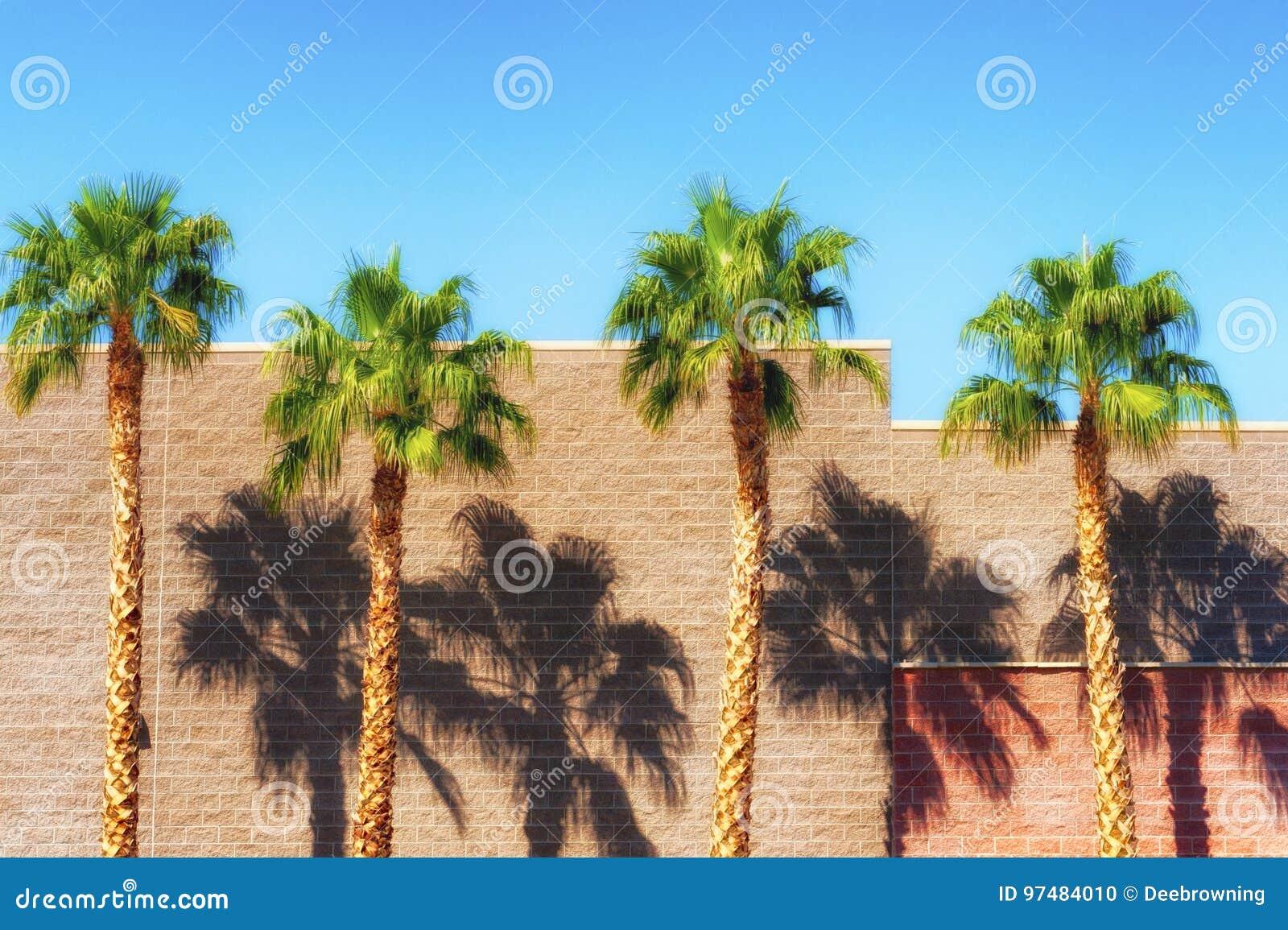 Le palme gettano le ombre dal lato della costruzione di mattone