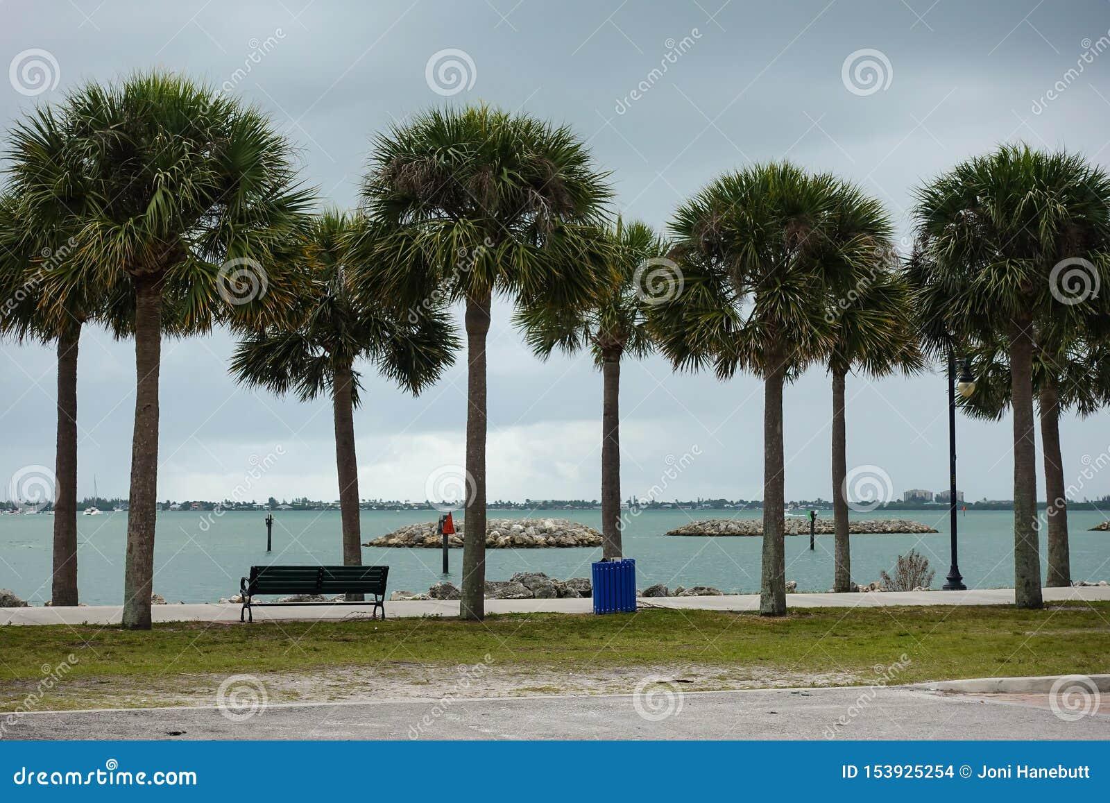 Le palmier a rayé la promenade le long du côté l intercoastal