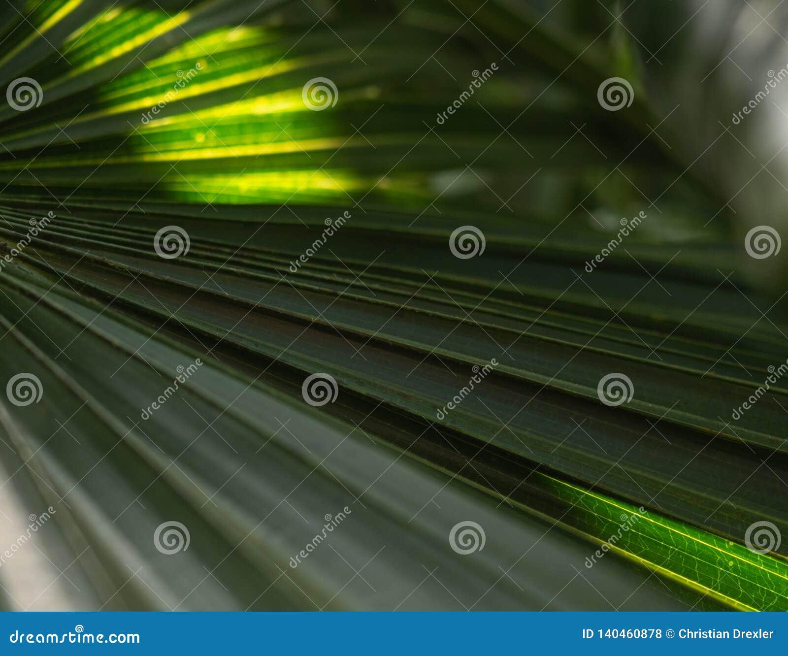 Le palmier vert part avec le contre-jour brillant par la texture