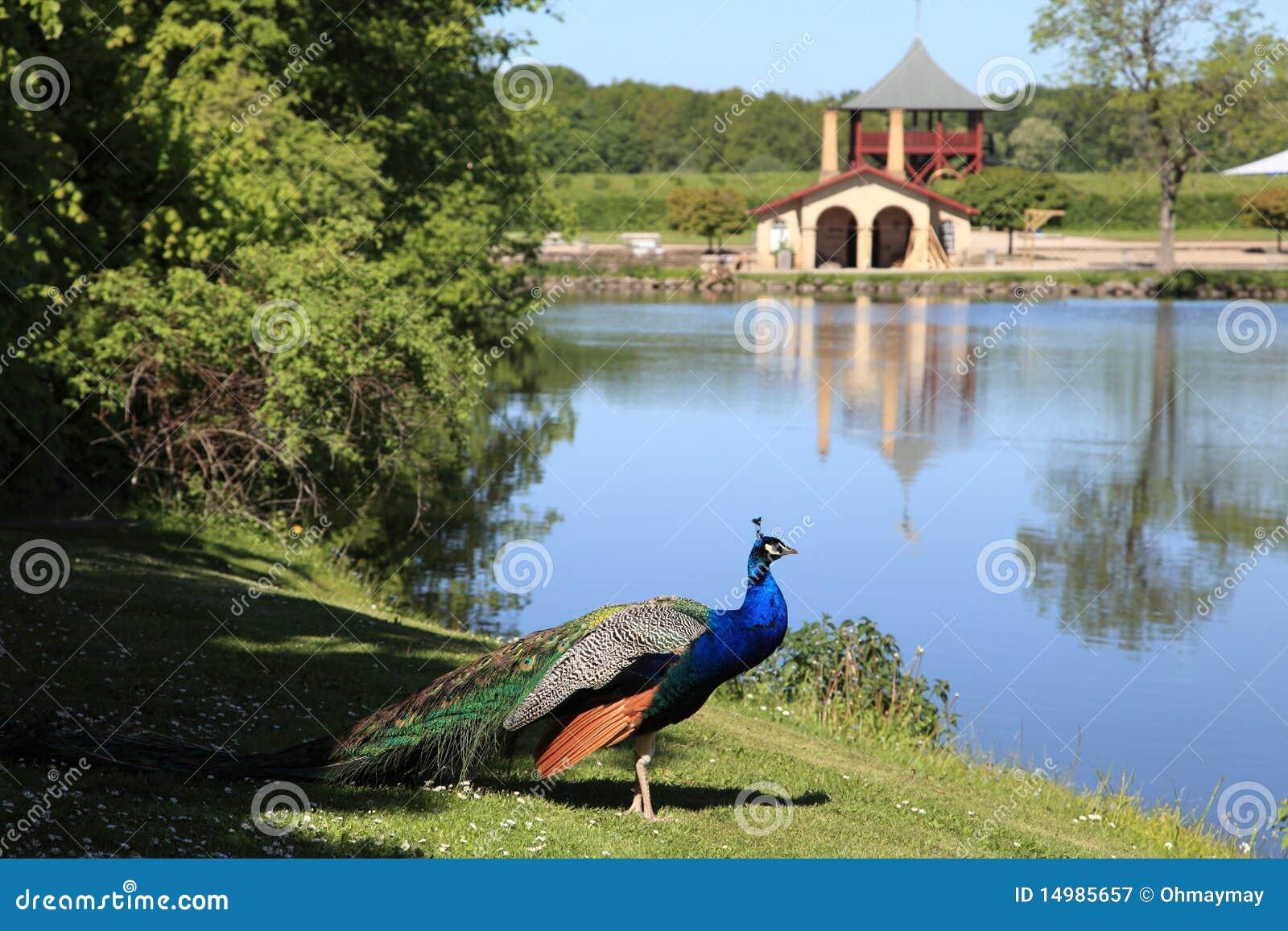 Le paon, le jardin et le lac chez Egeskov se retranchent