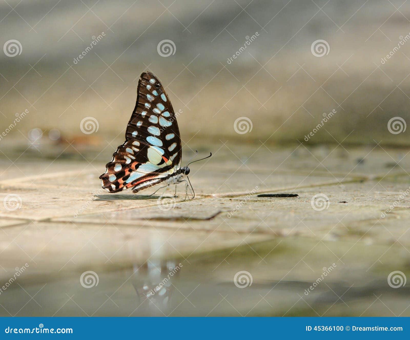 Le papillon se rappellent la jonction