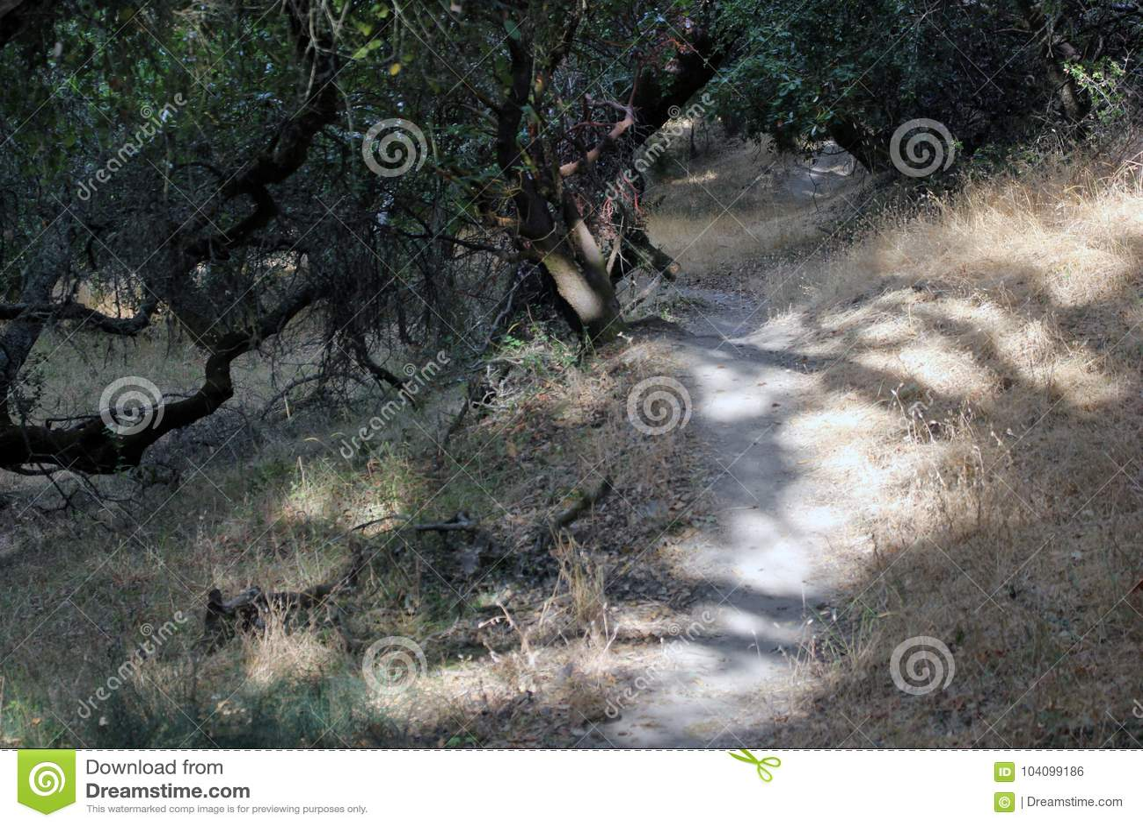 Le parc de Shiloh Ranch Regional The inclut les régions boisées de chêne, forêts des plantes vertes mélangées, arêtes avec des vu