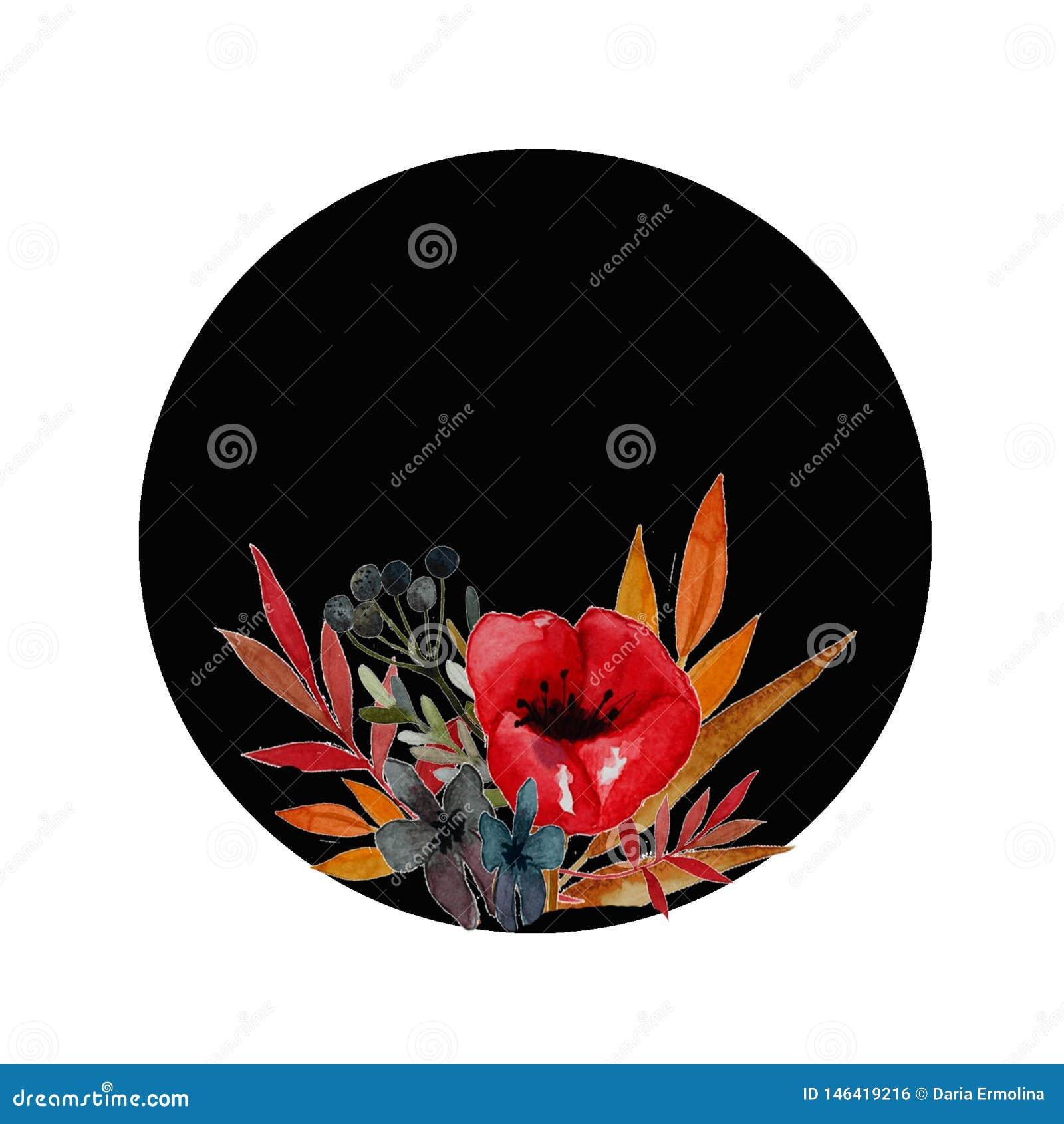 Le pavot fleurit l illustration