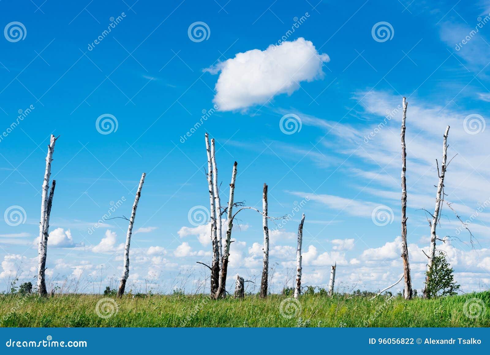 Le paysage dépeint les arbres cassés en raison d un grand hurric