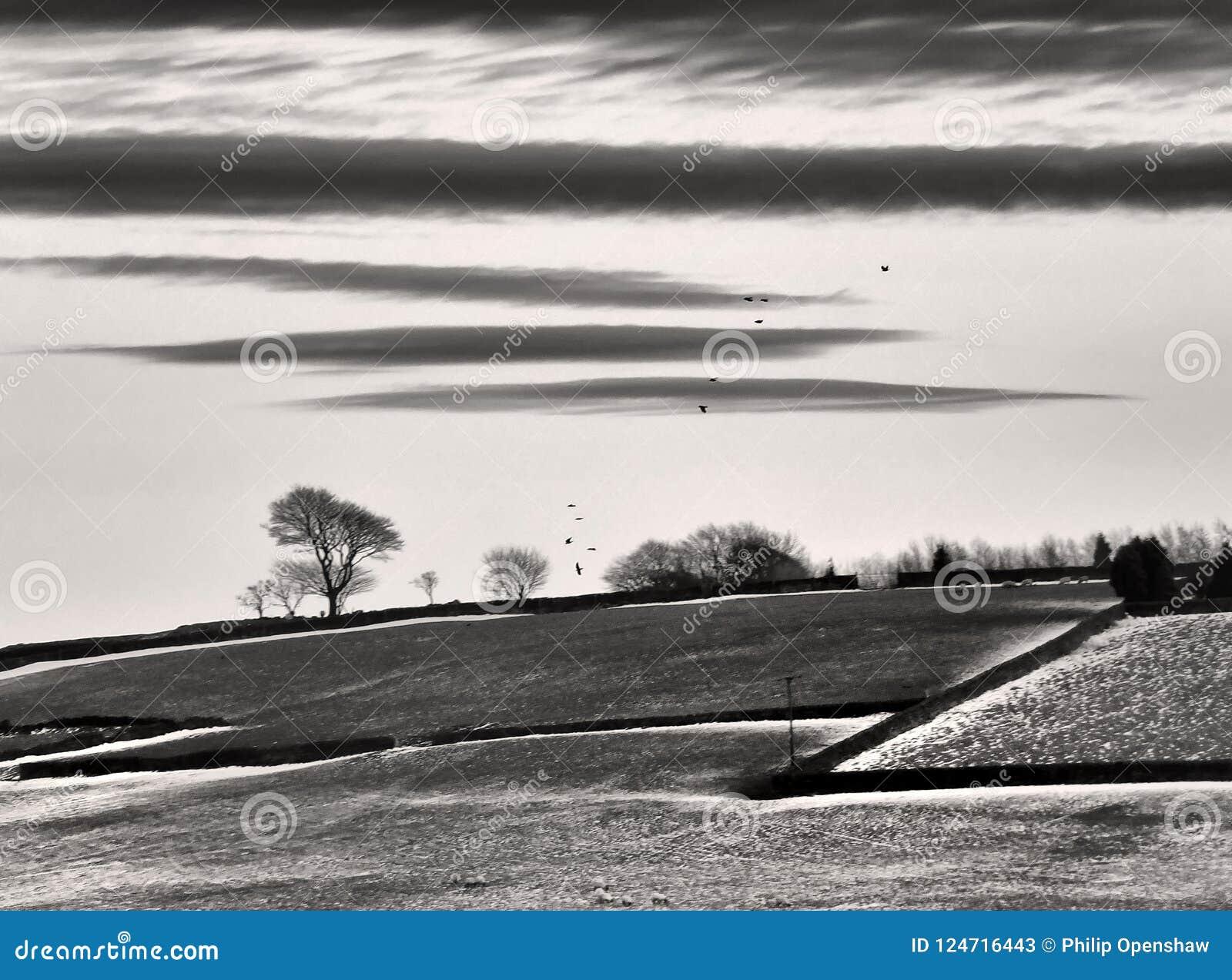 Le paysage morne monochrome rigide stylisé d hiver avec la neige a couvert des champs de murs en pierre noirs et de corneilles vo