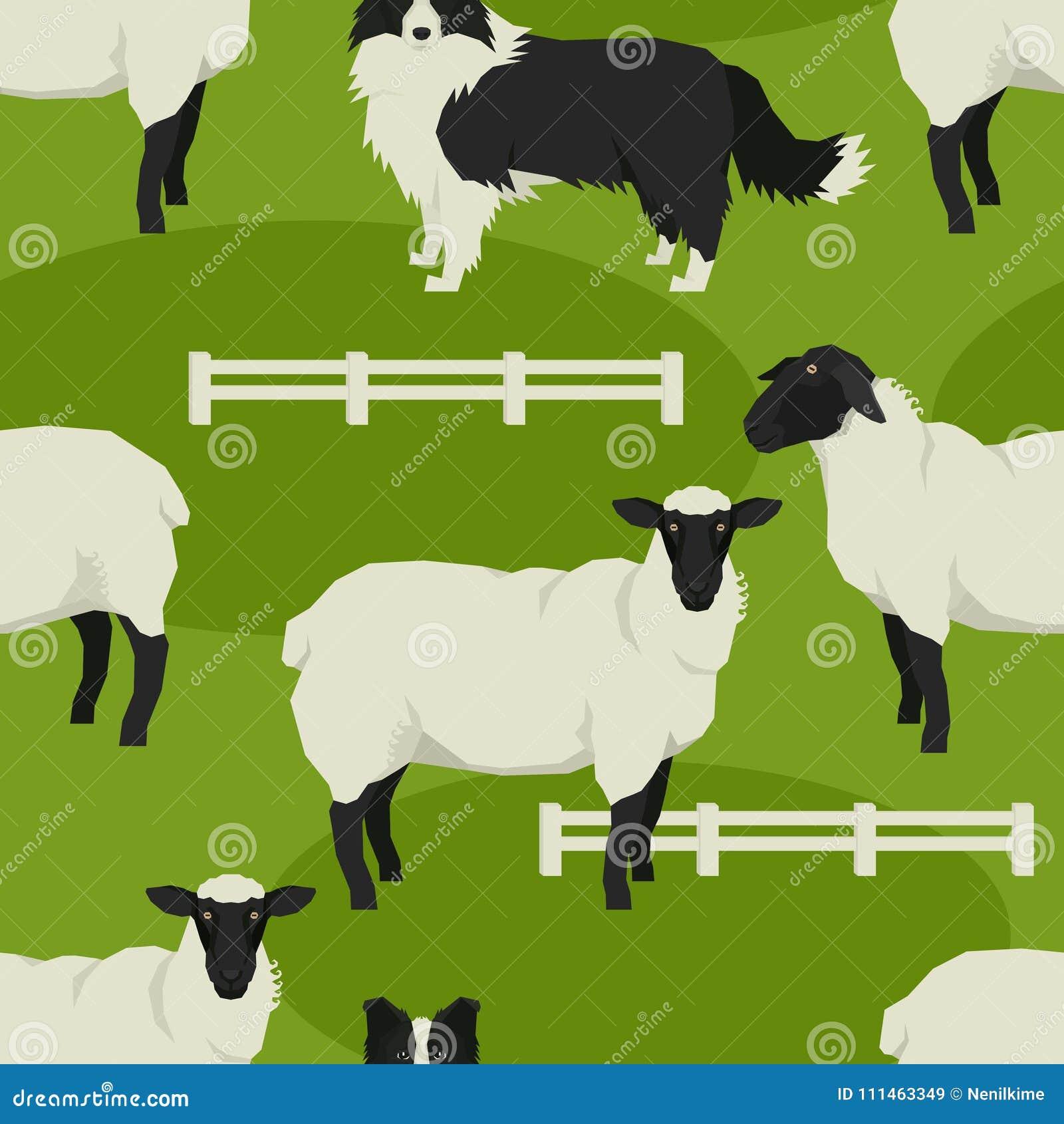 Le Pecore Ed I Cani Pastore Vector Il Modello Senza Cuciture Di