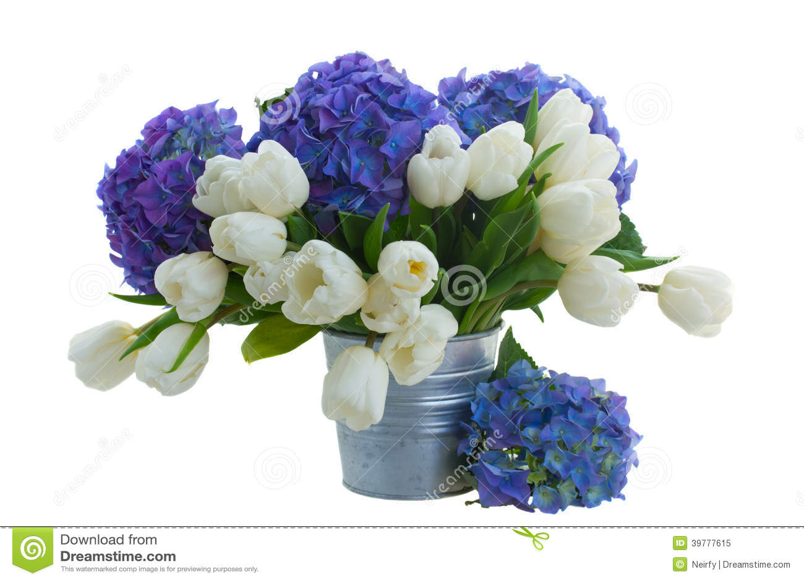 Le petit bouquet des tulipes blanches et du hortensia bleu for Bouquet de tulipes