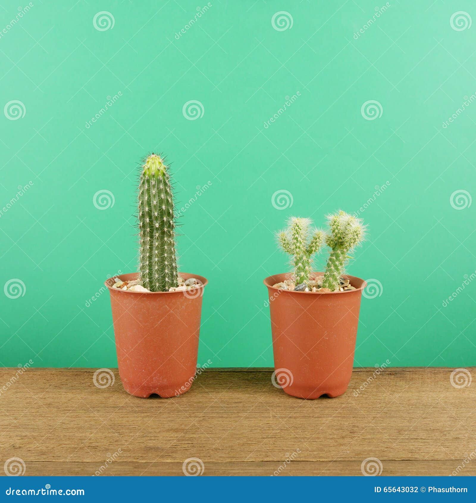 Le petit cactus vert dans le petit pot brun d usine sur les planches en bois brunes