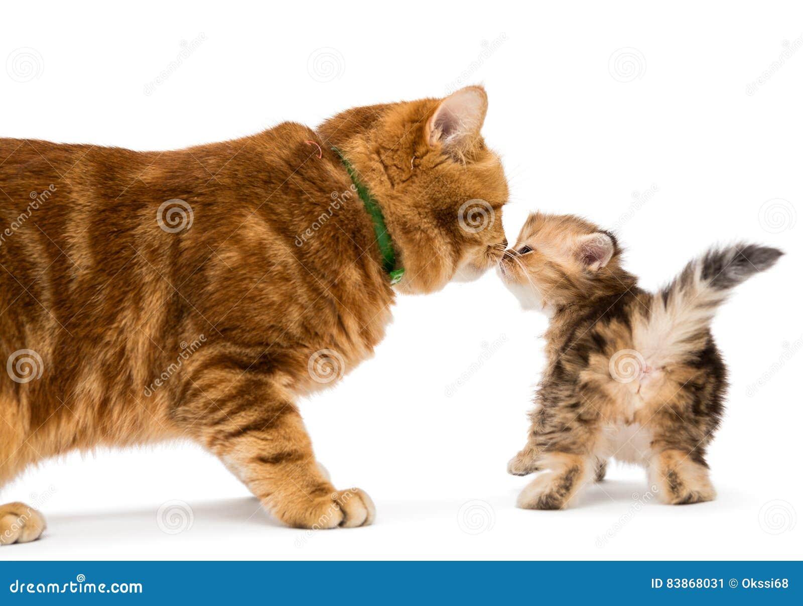 site de chat sexe chat adulte rencontre