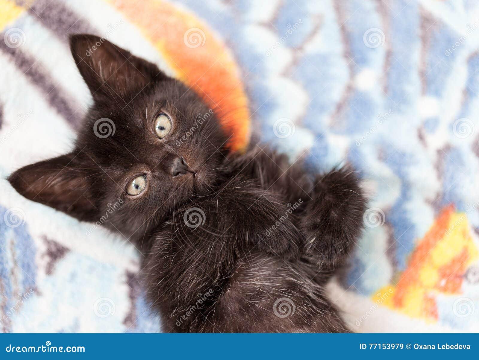 Le petit chaton mignon noir se trouve sur un lit