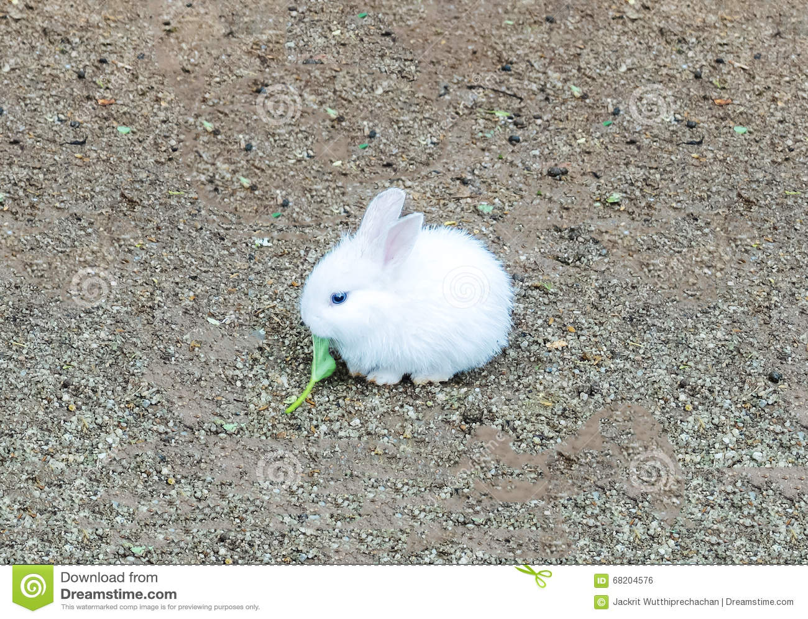 Le petit lapin de p ques mignon de b b lapin blanc - Photo de lapin mignon ...