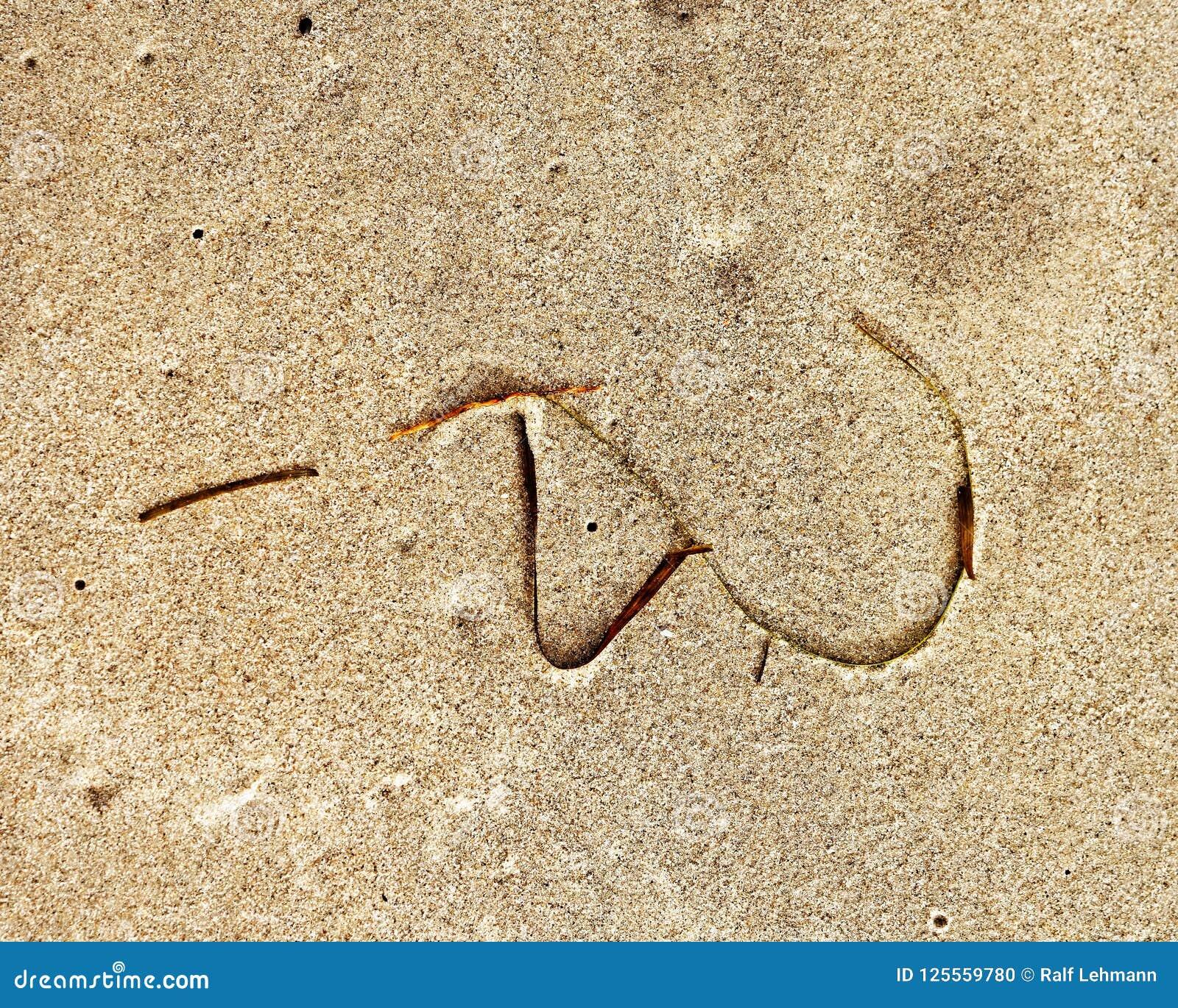Le plancton végétal de signe de plage sur une plage sablonneuse