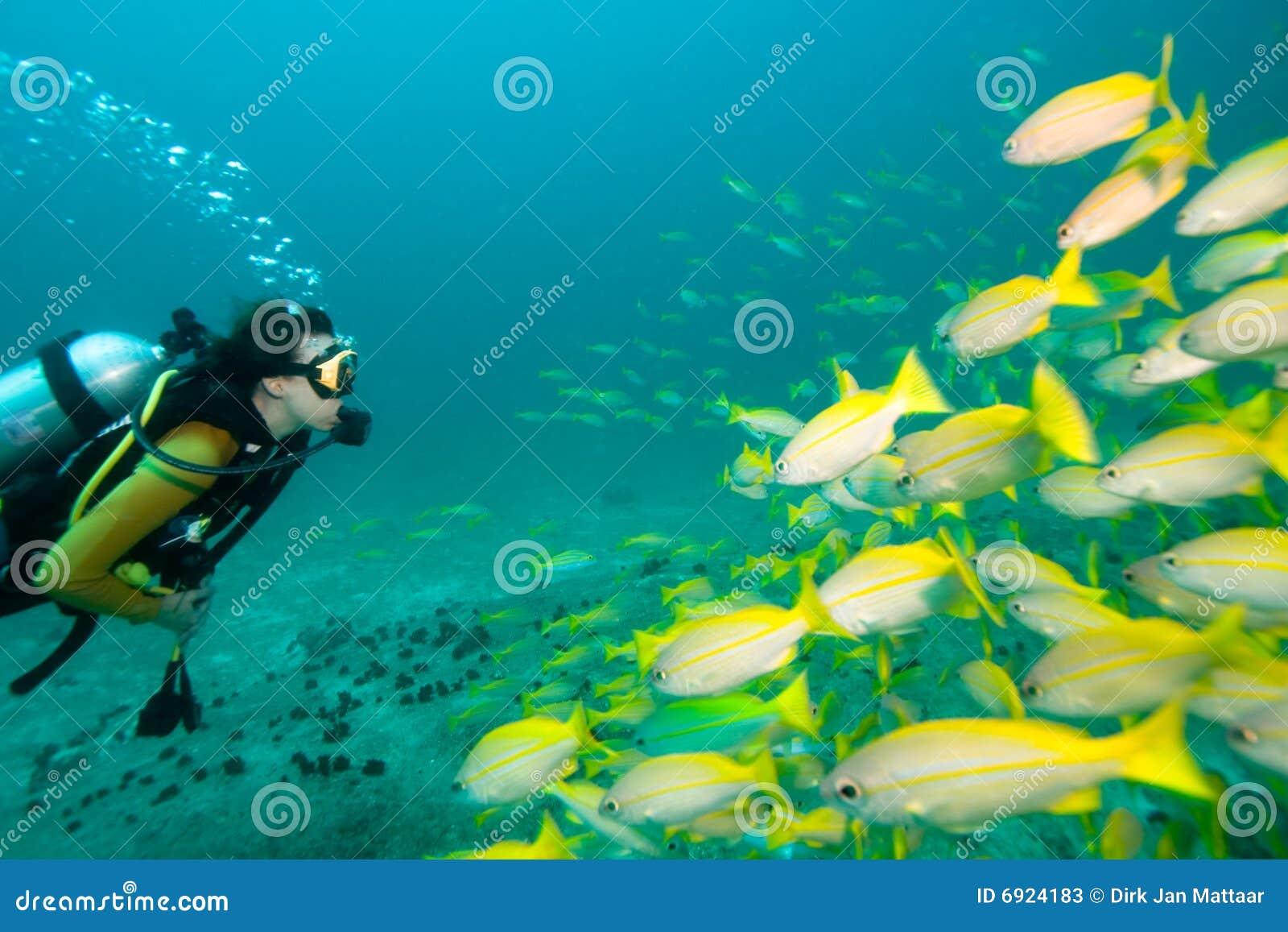 Le plongeur contacte des poissons
