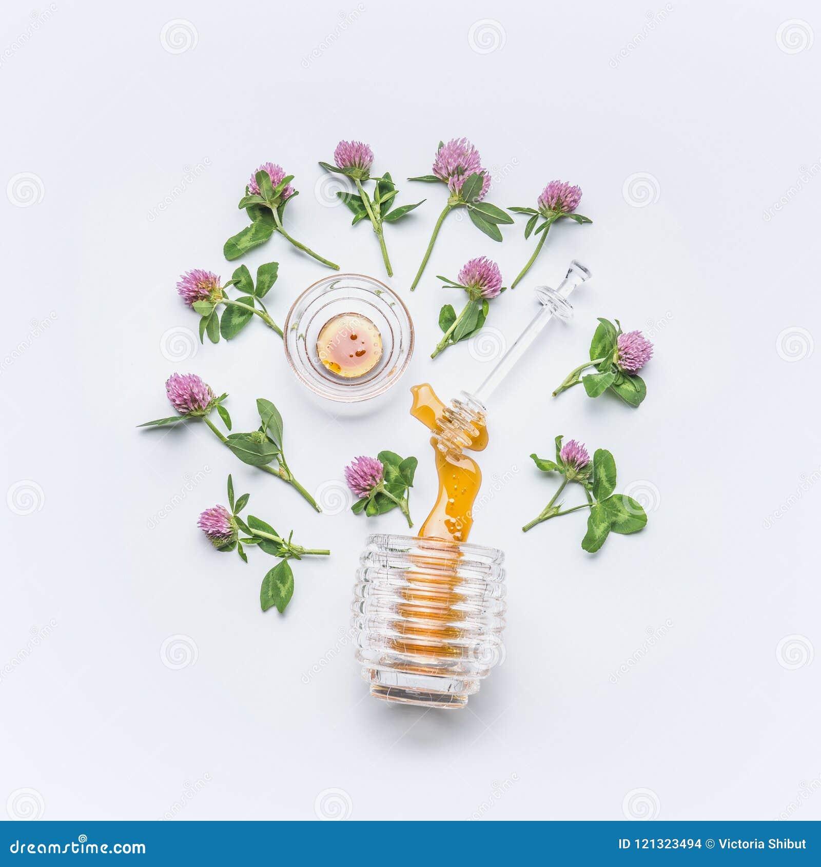 Le plongeur de miel avec du miel souille du pot avec les fleurs sauvages de trèfle sur le fond blanc