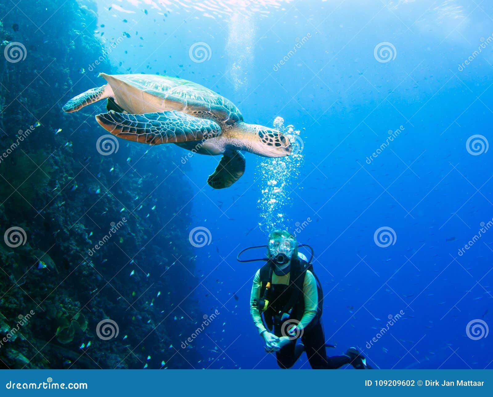 Plonger avec des tortues en Egypte | Different Dive