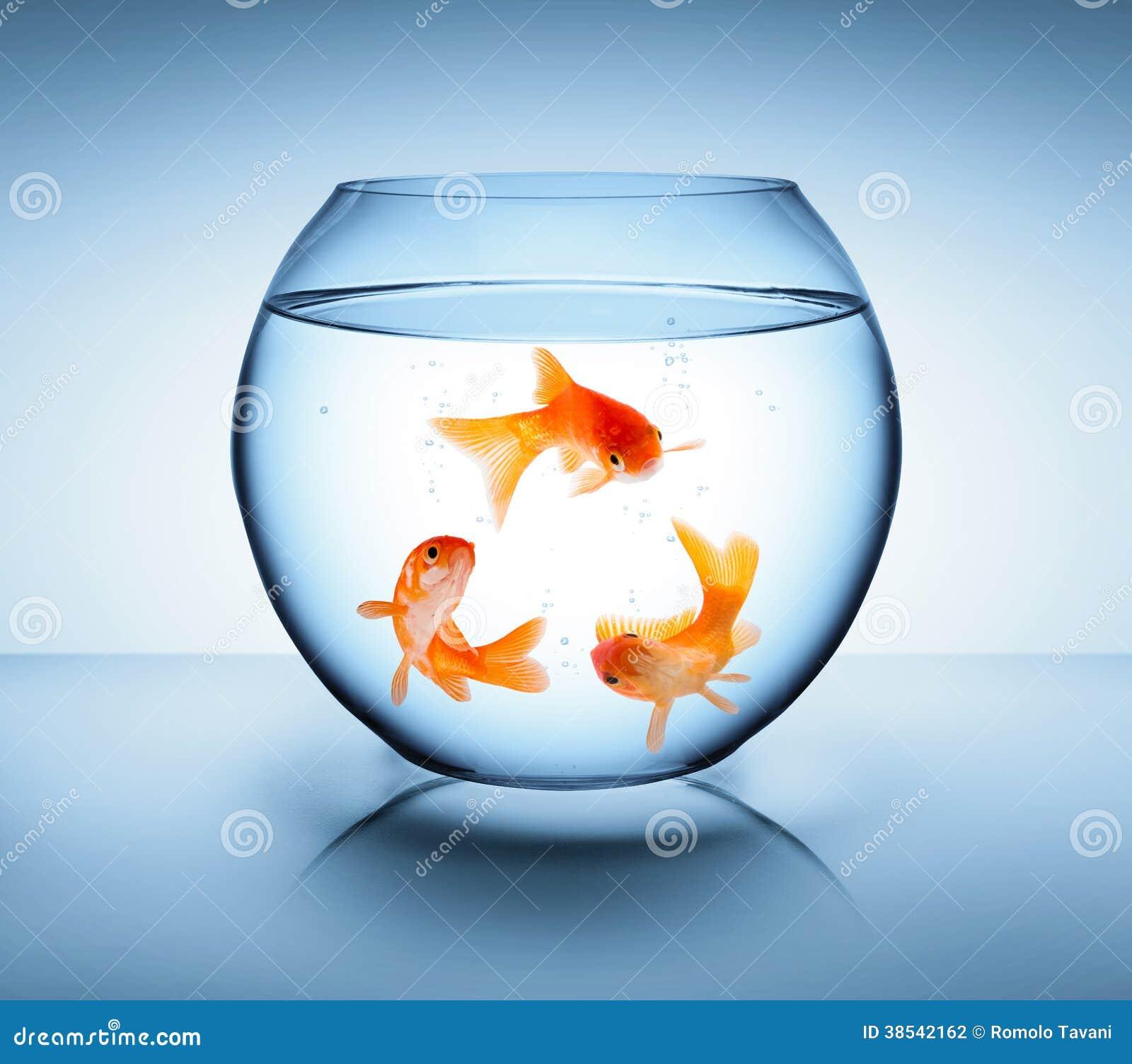 Le poisson rouge réutilisent dedans le concept