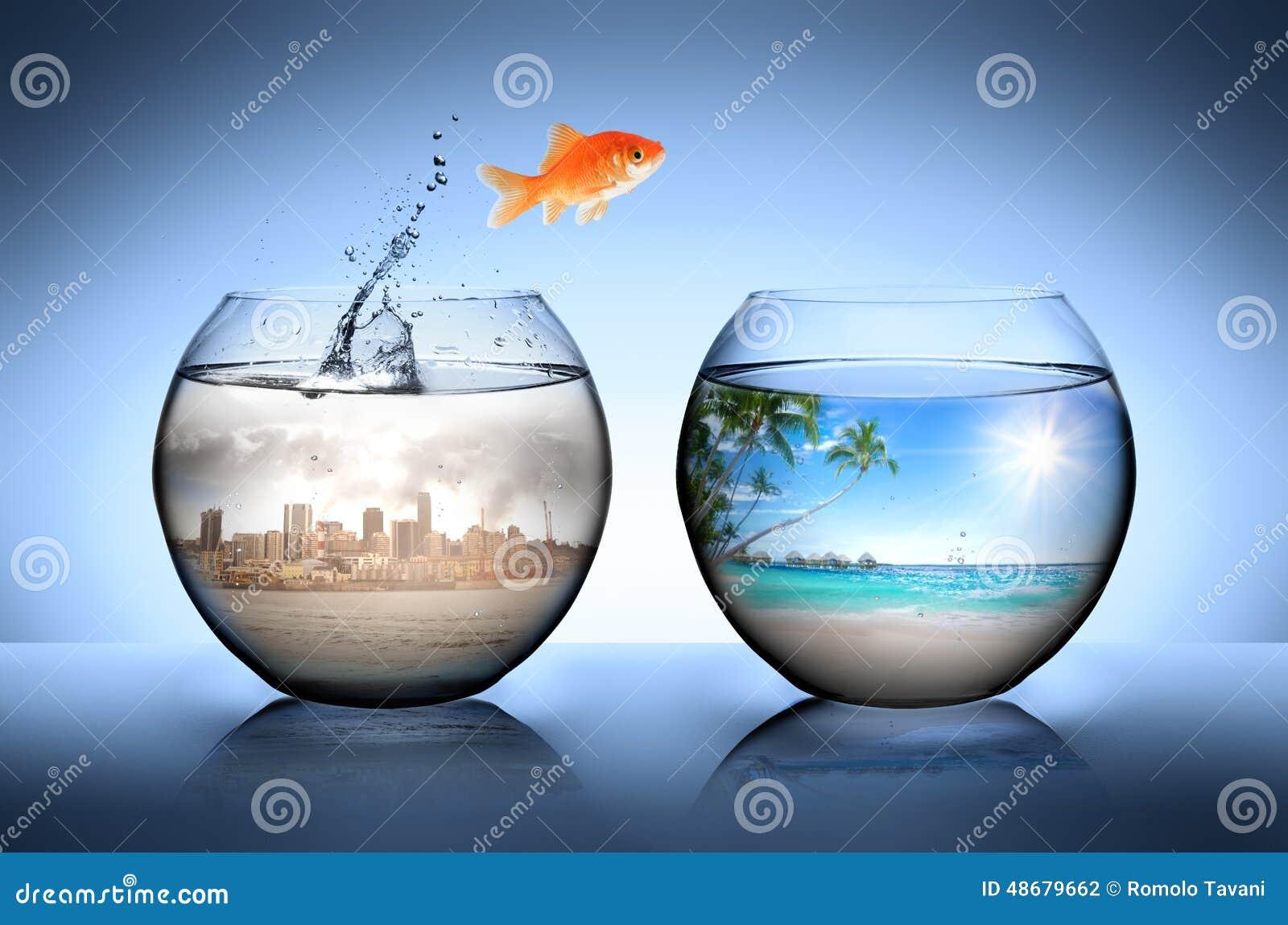 Le poisson rouge sautant partir de la ville pour des for Achat poisson rouge lyon