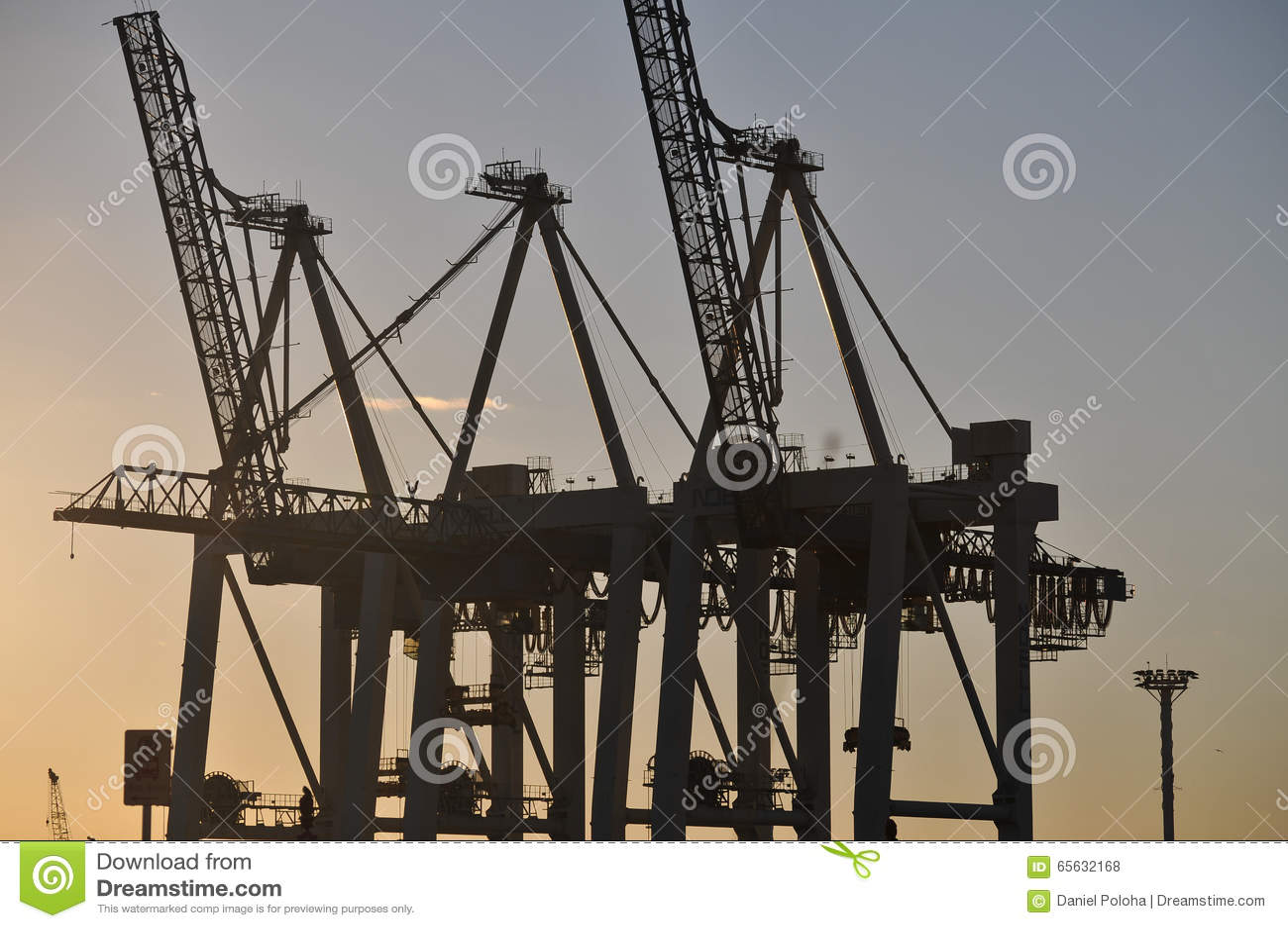 Le port tend le cou la silhouette