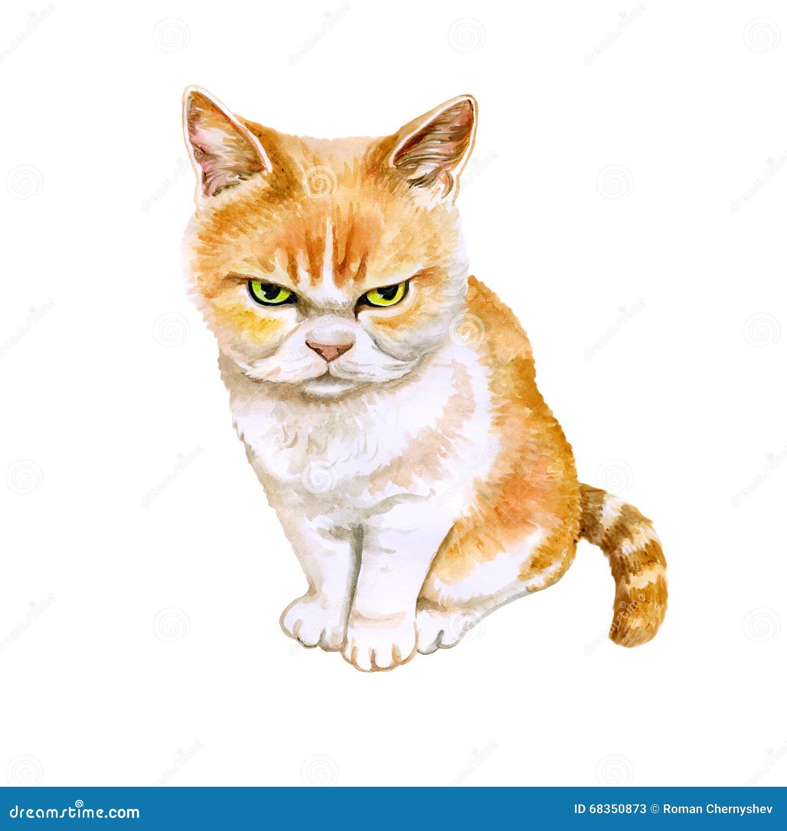 Le portrait d aquarelle de l écossais plient le chat fâché japonais de chat sur le fond blanc Animal familier à la maison doux ti