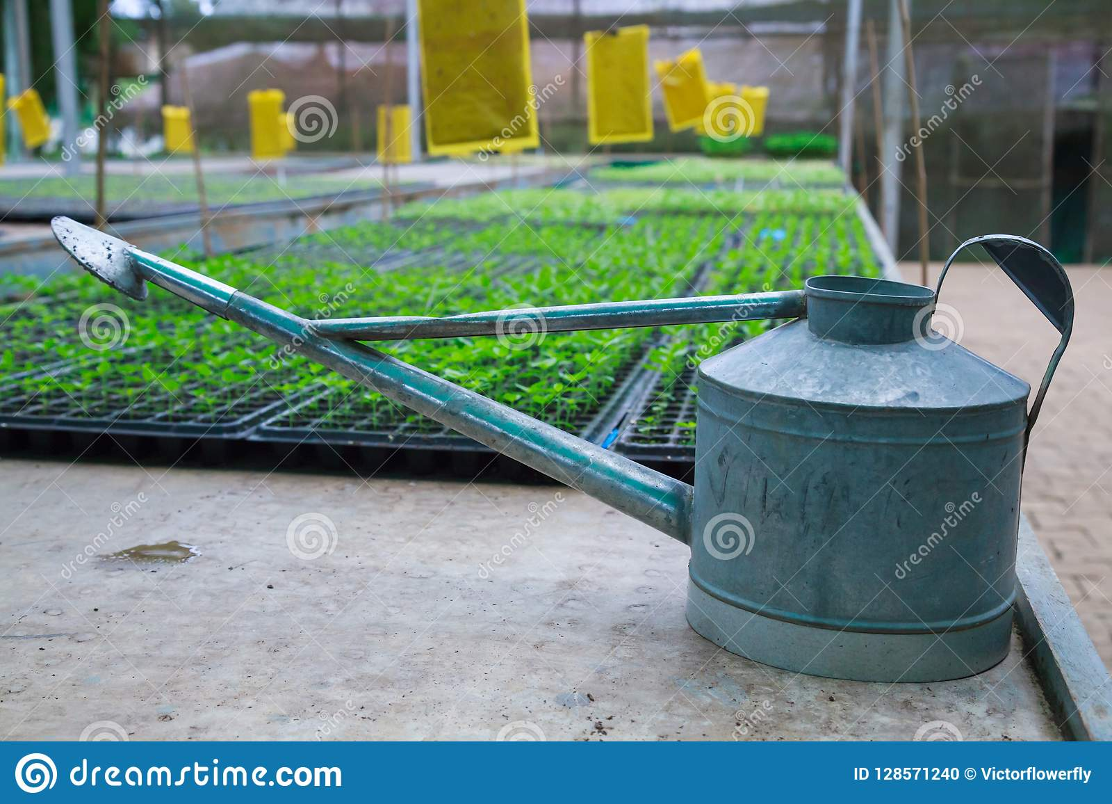 Arrosage Pour Plantes En Pot le pot d'arrosage ou peut pour des palettes de jeunes