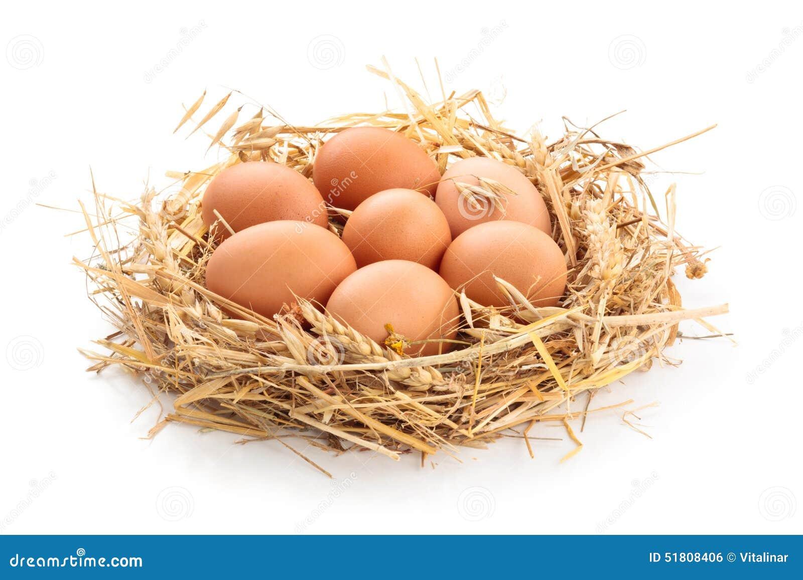 Le poulet eggs l emboîtement