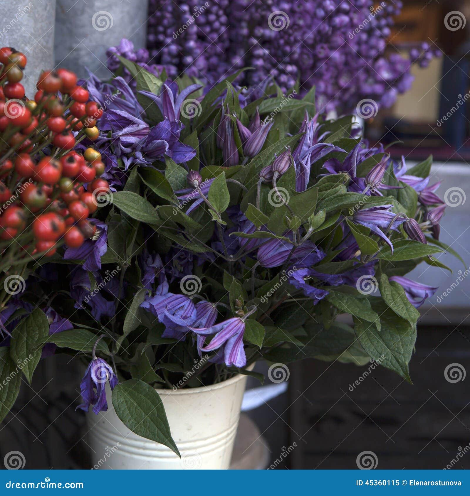 Le pré fleurit des lupines, renoncules, jacinthes des bois