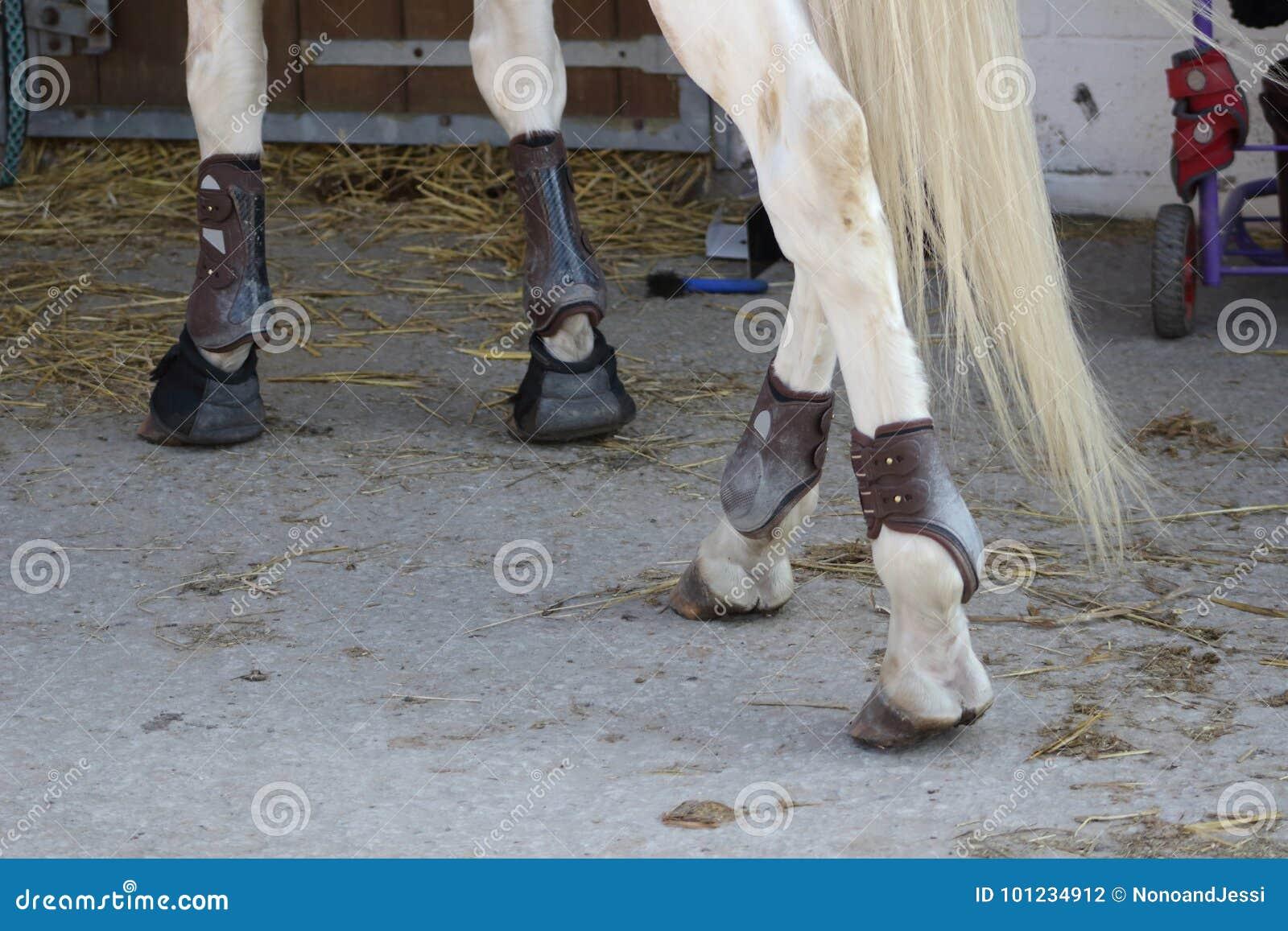 L Angolo Del Cuoio.Le Protezioni Di Cuoio Per Le Gambe E Le Palle Dei Cavalli