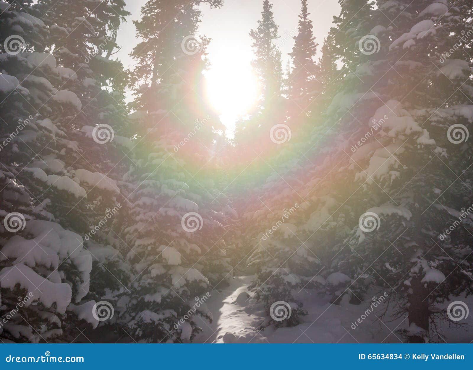Le rayon de soleil par la neige a couvert des arbres
