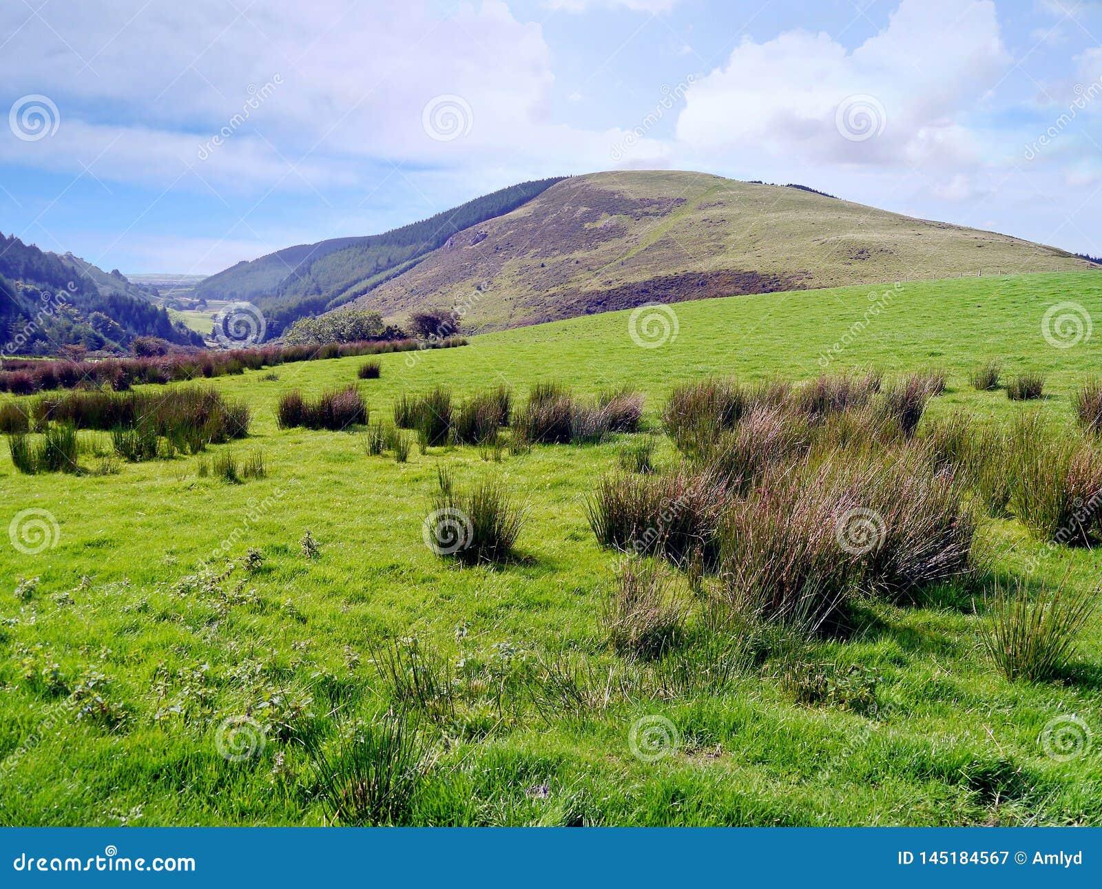 Le regard à bosseler est tombé à travers des touffes sur les champs herbeux