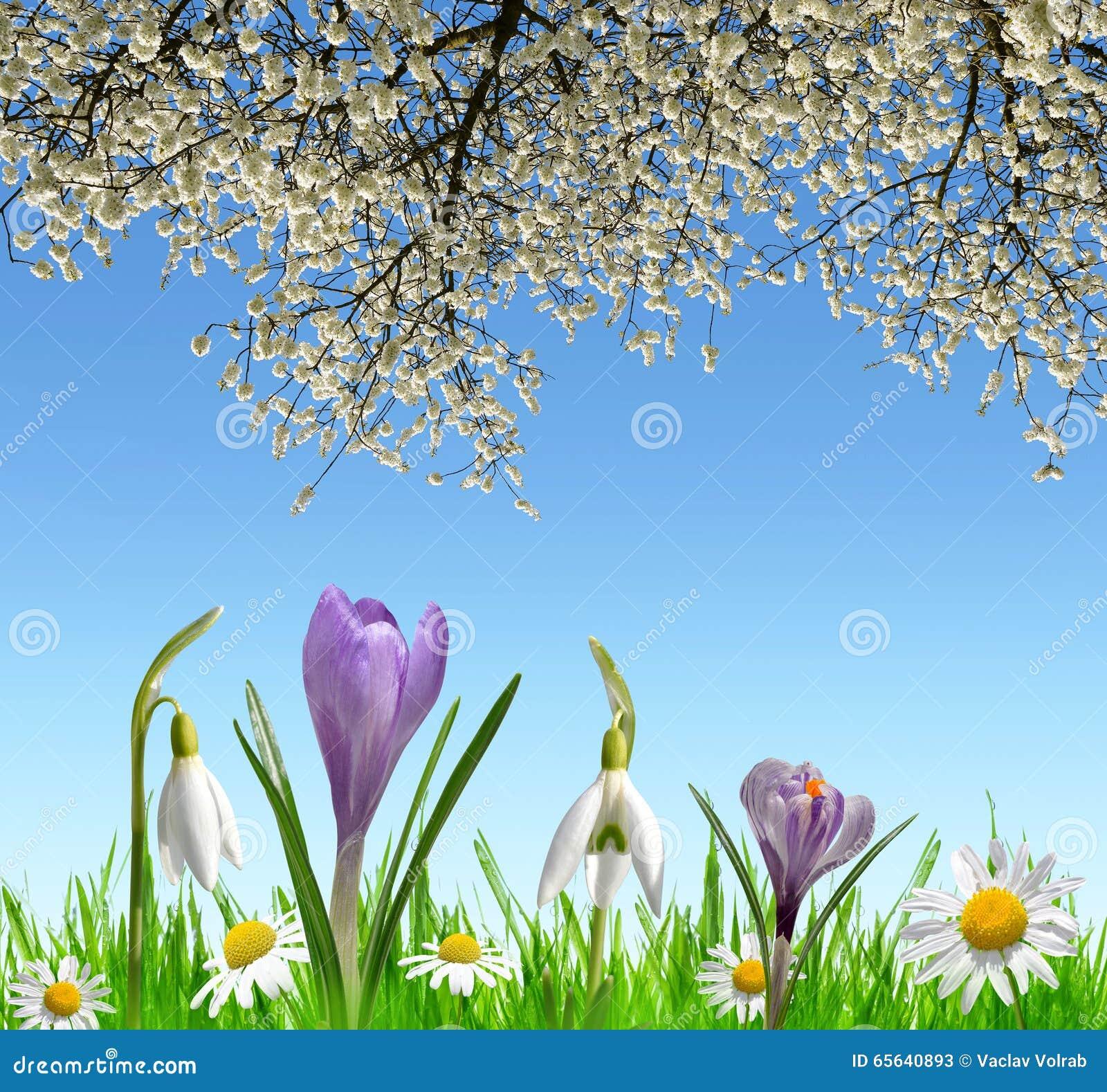 Le ressort fleurit les perce-neige, le crocus et la marguerite