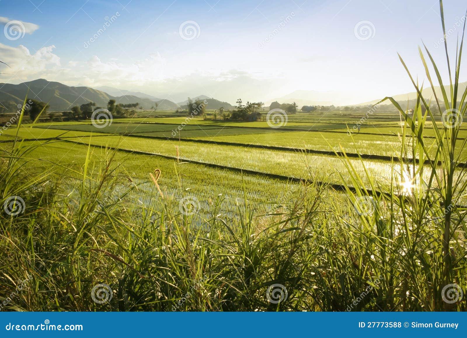 Le riz met en place luzon nordique les Philippines